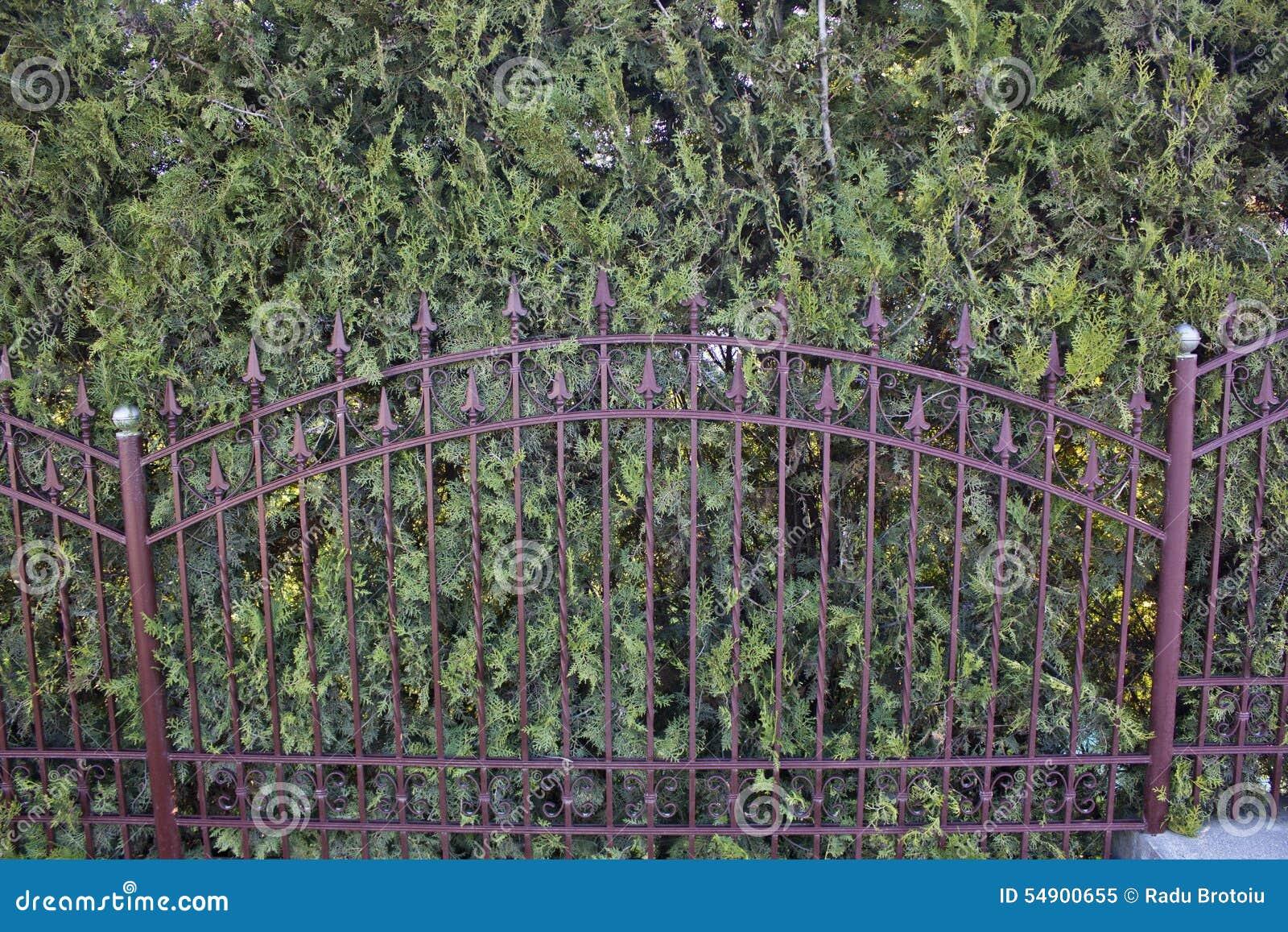 Eisen Zaun und Thuja stockbild Bild von grün zaun dekorativ