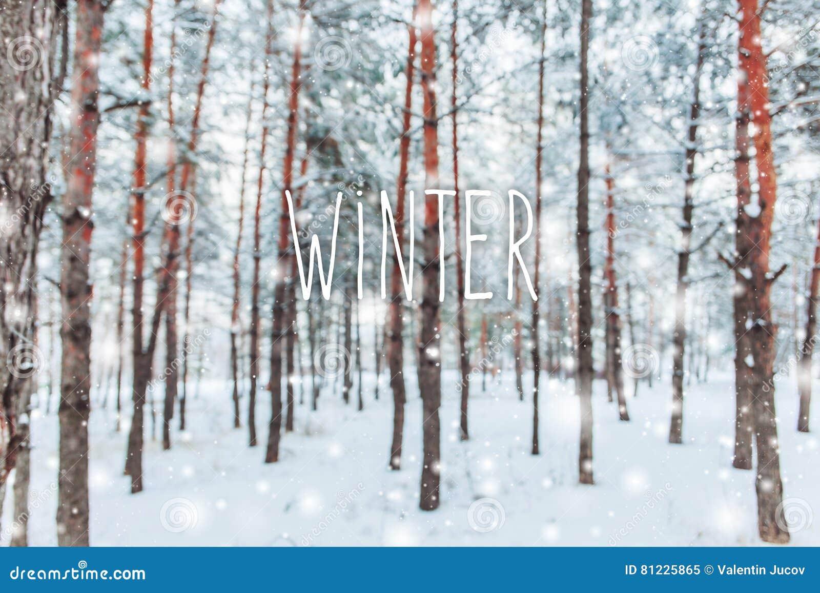 Eisige Winterlandschaft in den schneebedeckten Waldkiefernniederlassungen umfasst mit Schnee im kalten Winterwetter Weihnachtshin