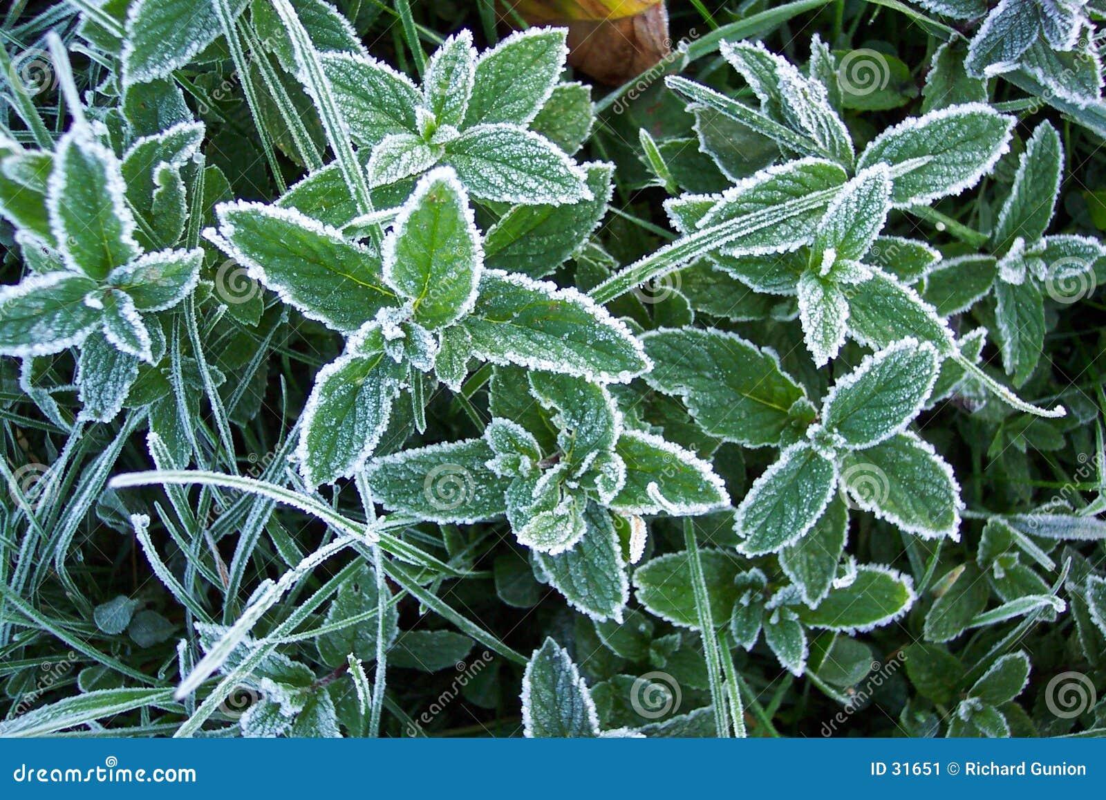 Download Eisiger Morgen stockbild. Bild von gefroren, eisig, bauernhof - 31651
