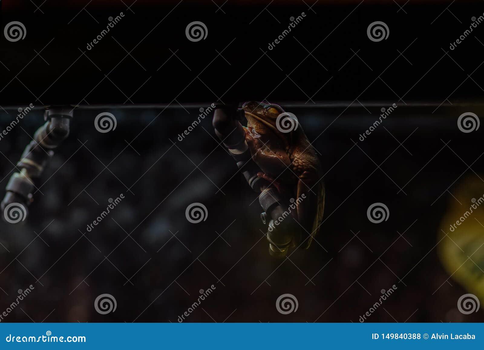 Ejecución Icky de la rana en la oscuridad