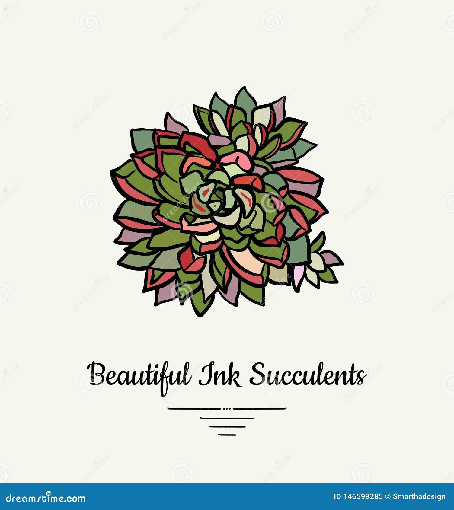 Ejemplo aislado vector suculento exhausto de la mano de Echeveria Logotipo suculento de la planta de la tinta moderna, icono, car