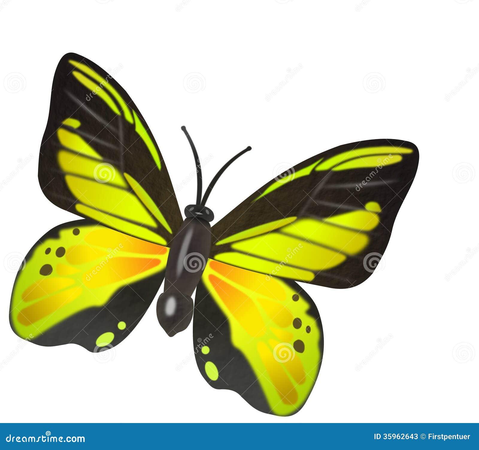 Ejemplo amarillo de la mariposa
