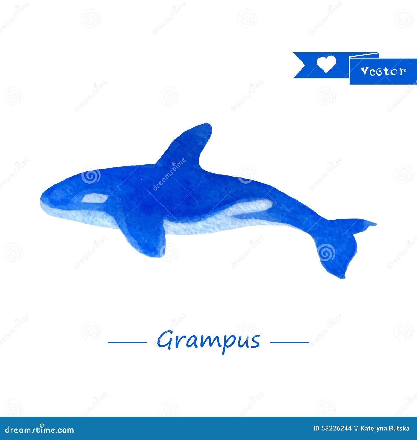Ejemplo azul de la orca Acuarela Handdrawn
