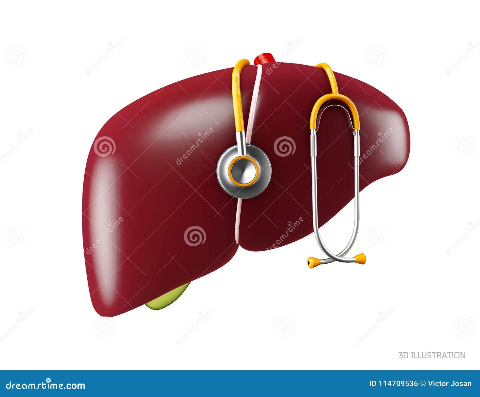 Ejemplo 3d De La Anatomía Humana Del Hígado Símbolo Humano De Los ...