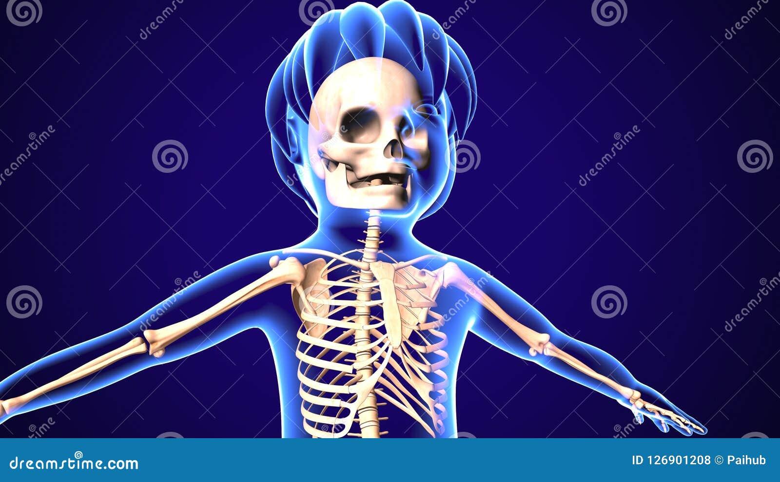 Ejemplo 3d De La Anatomía De Los Huesos De Pie Del Bebé Stock de ...