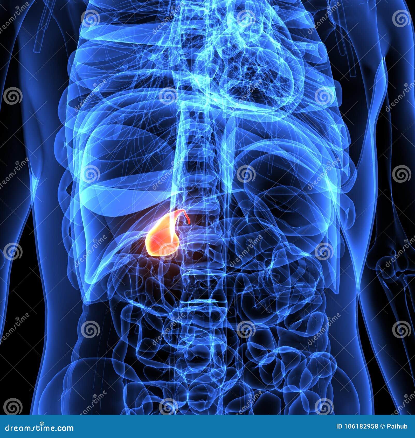 Vistoso Vesícula Biliar Anatomía Humana Patrón - Imágenes de ...