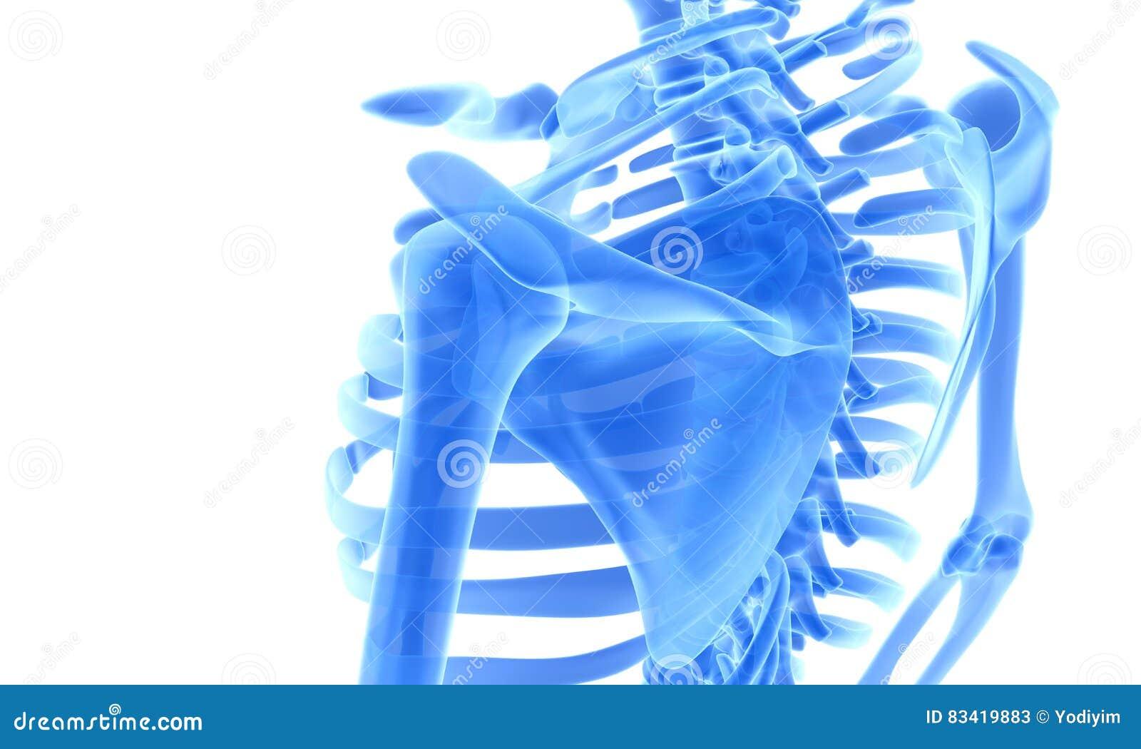 Ejemplo 3D Del Sistema Esquelético Azul Brillante Stock de ...