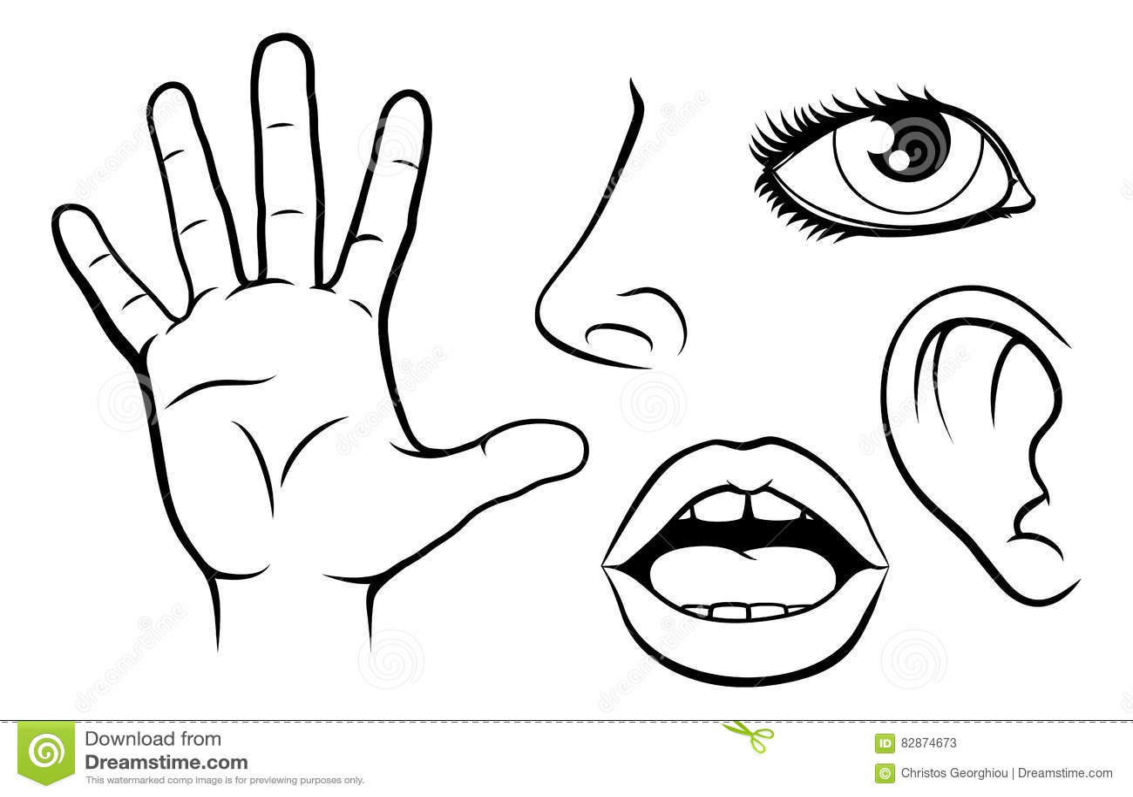 Ejemplo De Cinco Sentidos Ilustración Del Vector