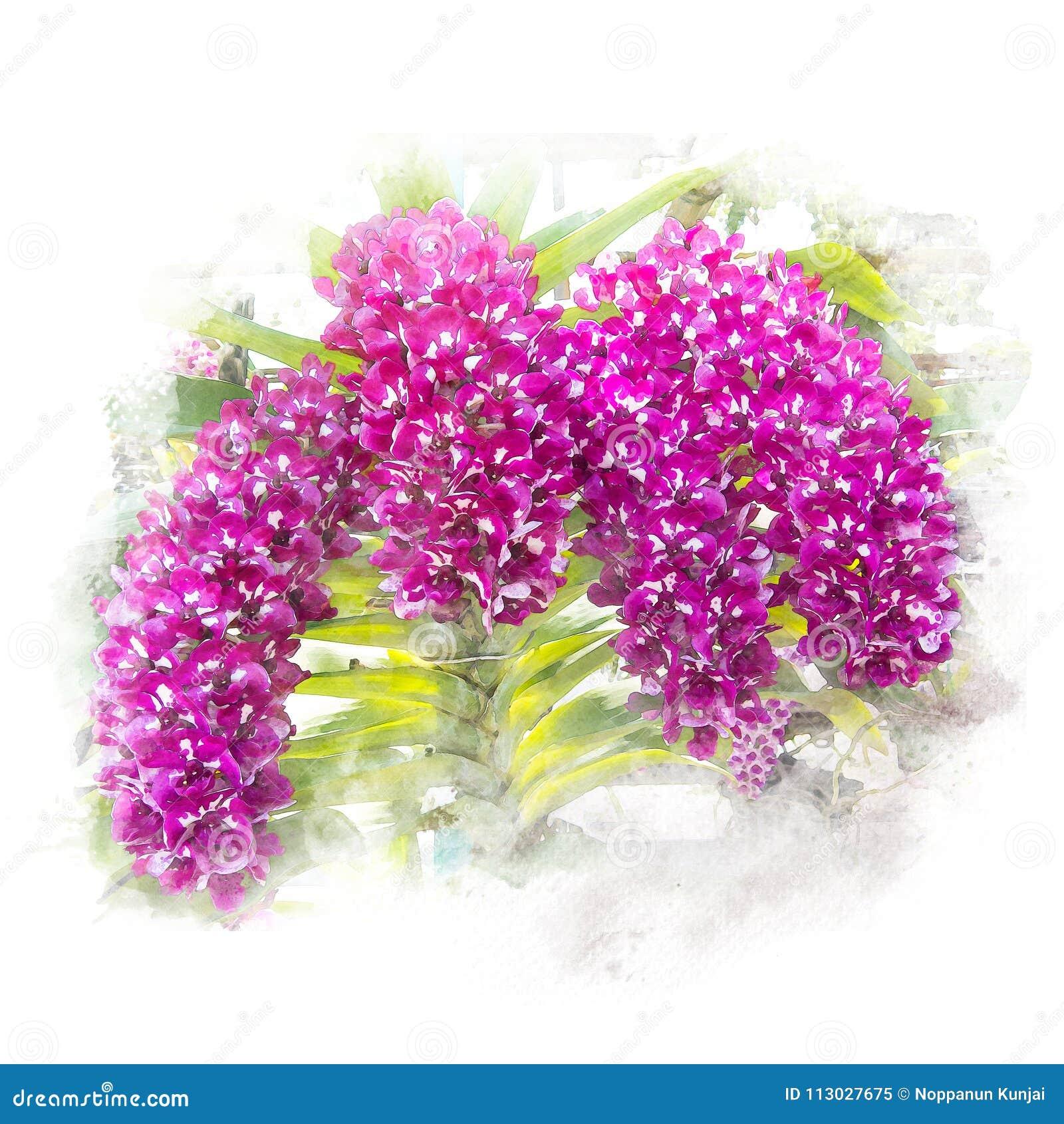 Ejemplo de la orquídea hermosa del flor