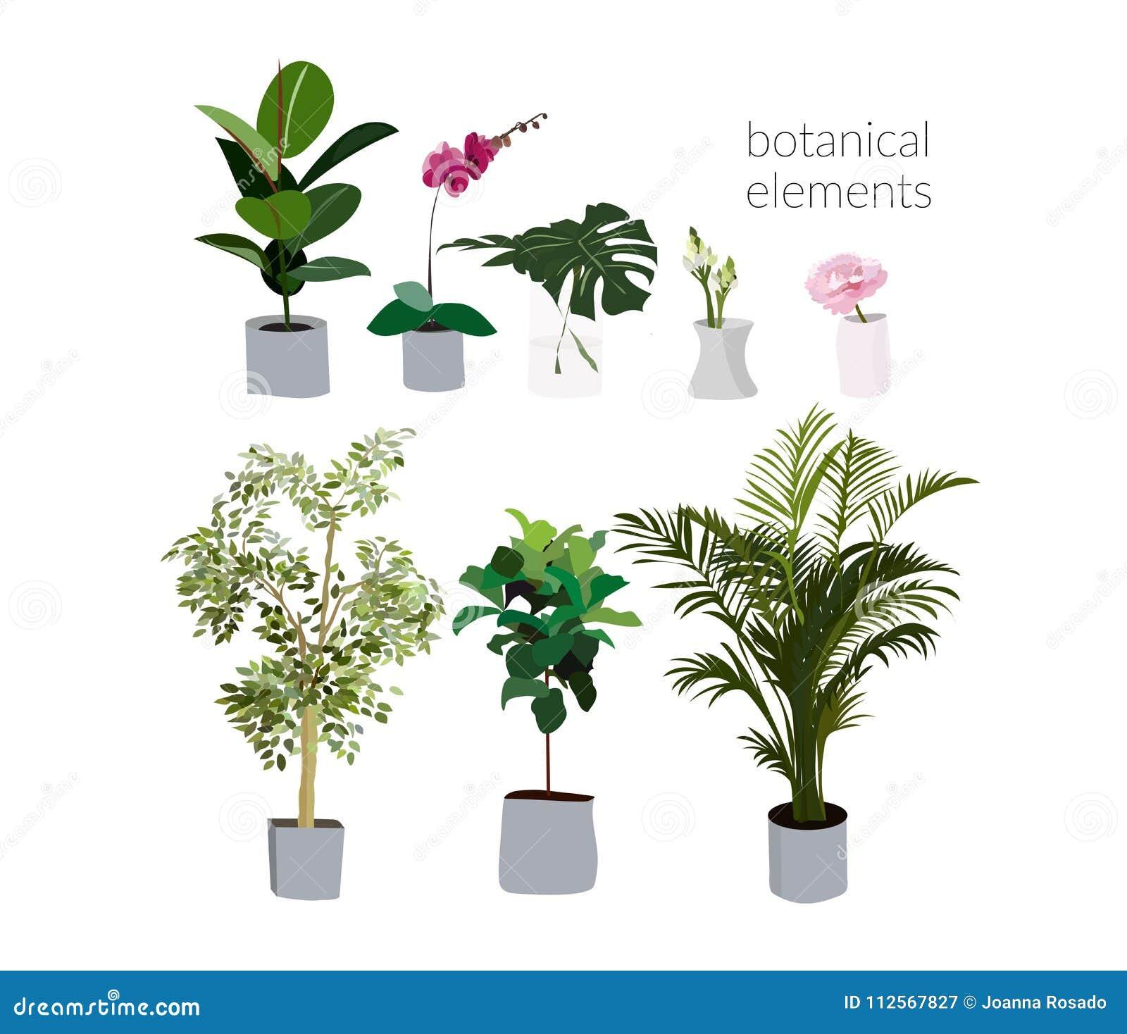 Ejemplo De Las Plantas De Tiesto Del Vector Philodendron, Palmera ...