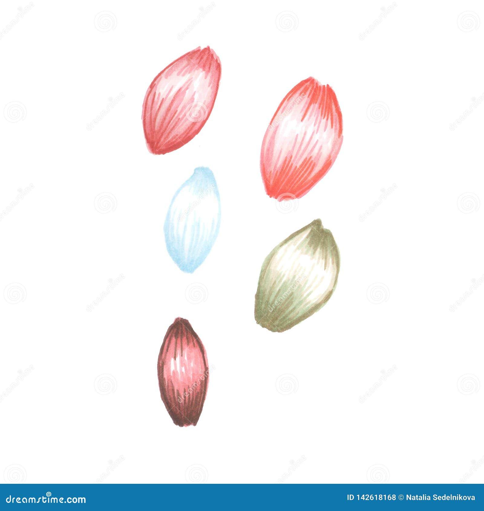 Ejemplo de los pétalos de la flor