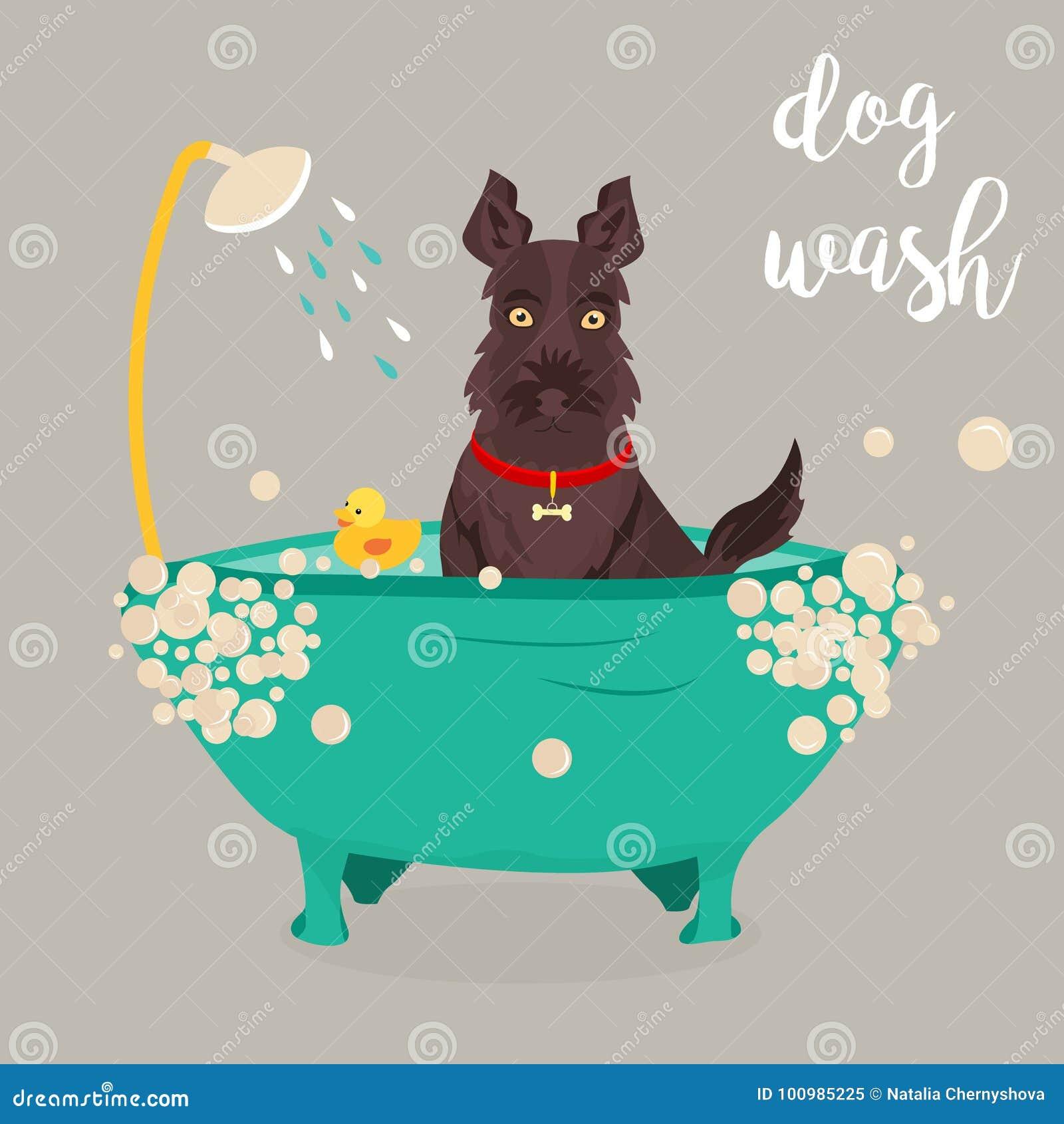 Ejemplo de un perro que toma una ducha