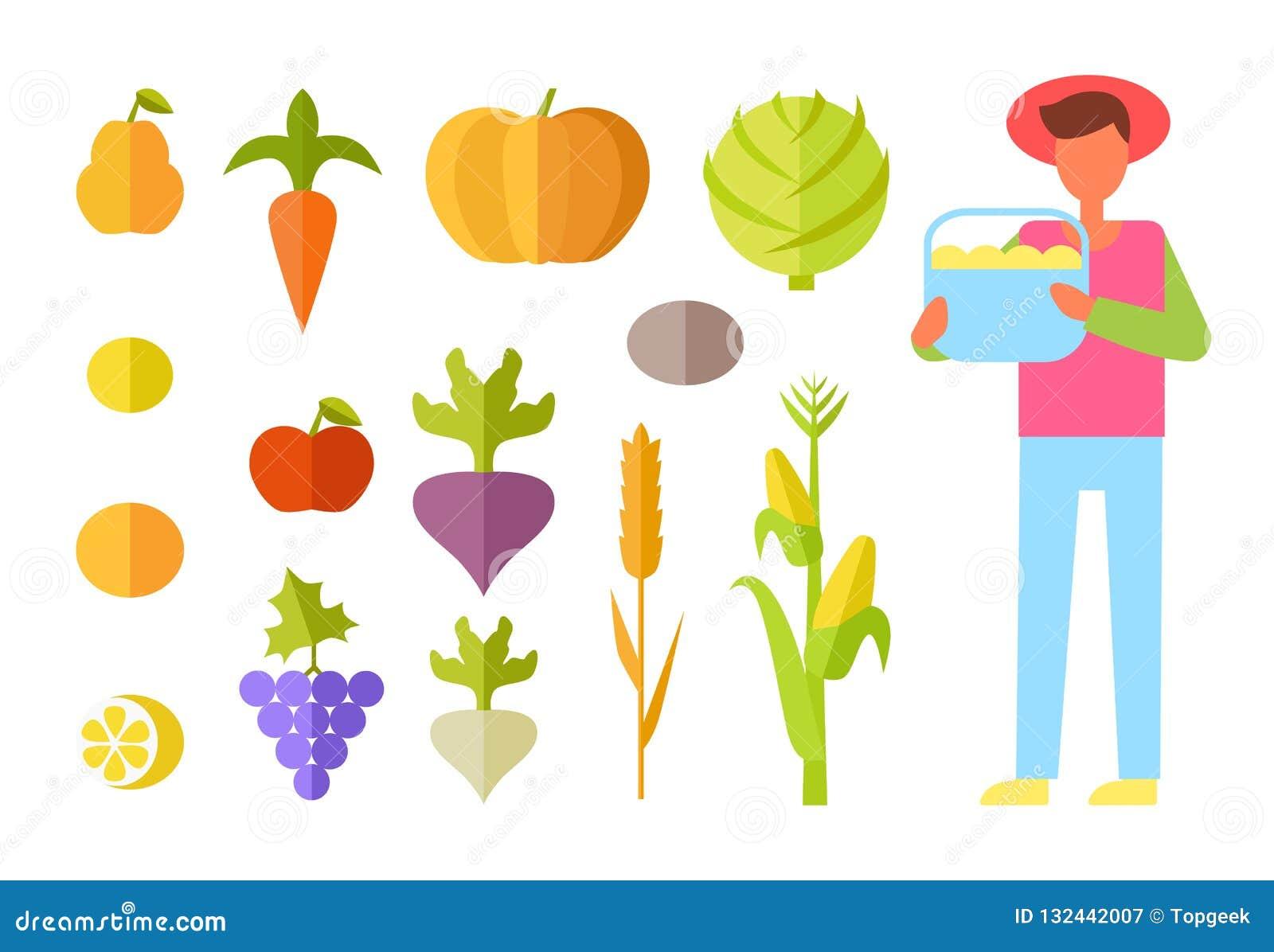 Ejemplo de Vegetables Set Vector del granjero de la cosecha