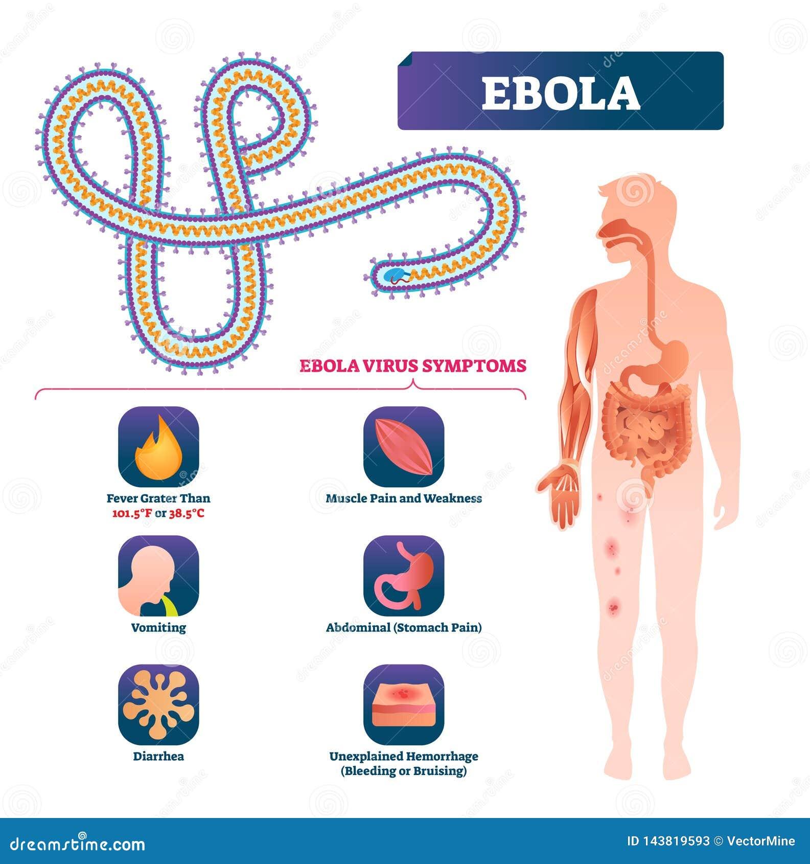 sintomas de infeccion bacteriana