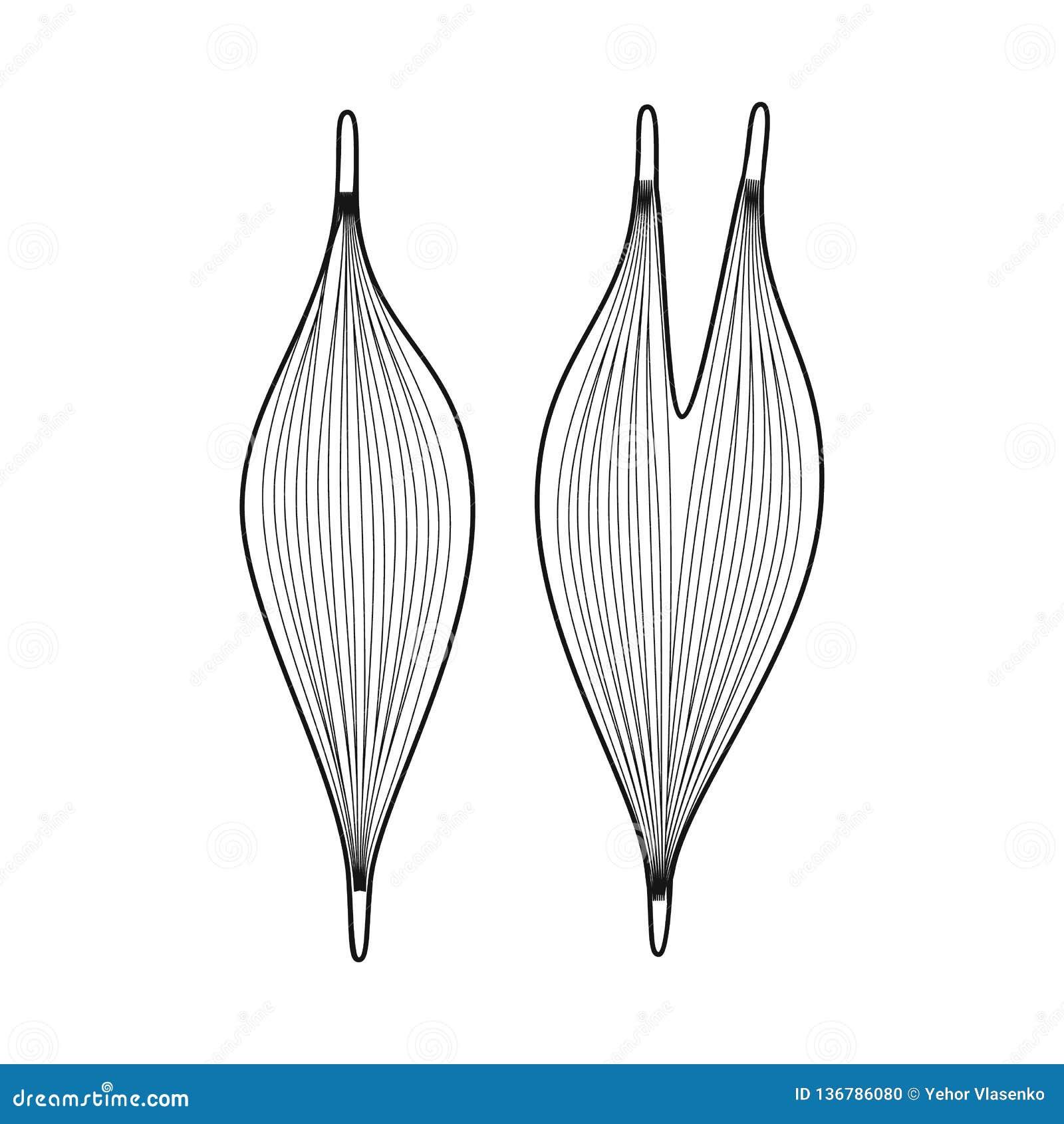 Ejemplo del vector de la muestra de la anatomía y del órgano Fije de la anatomía y del símbolo común médico para la web