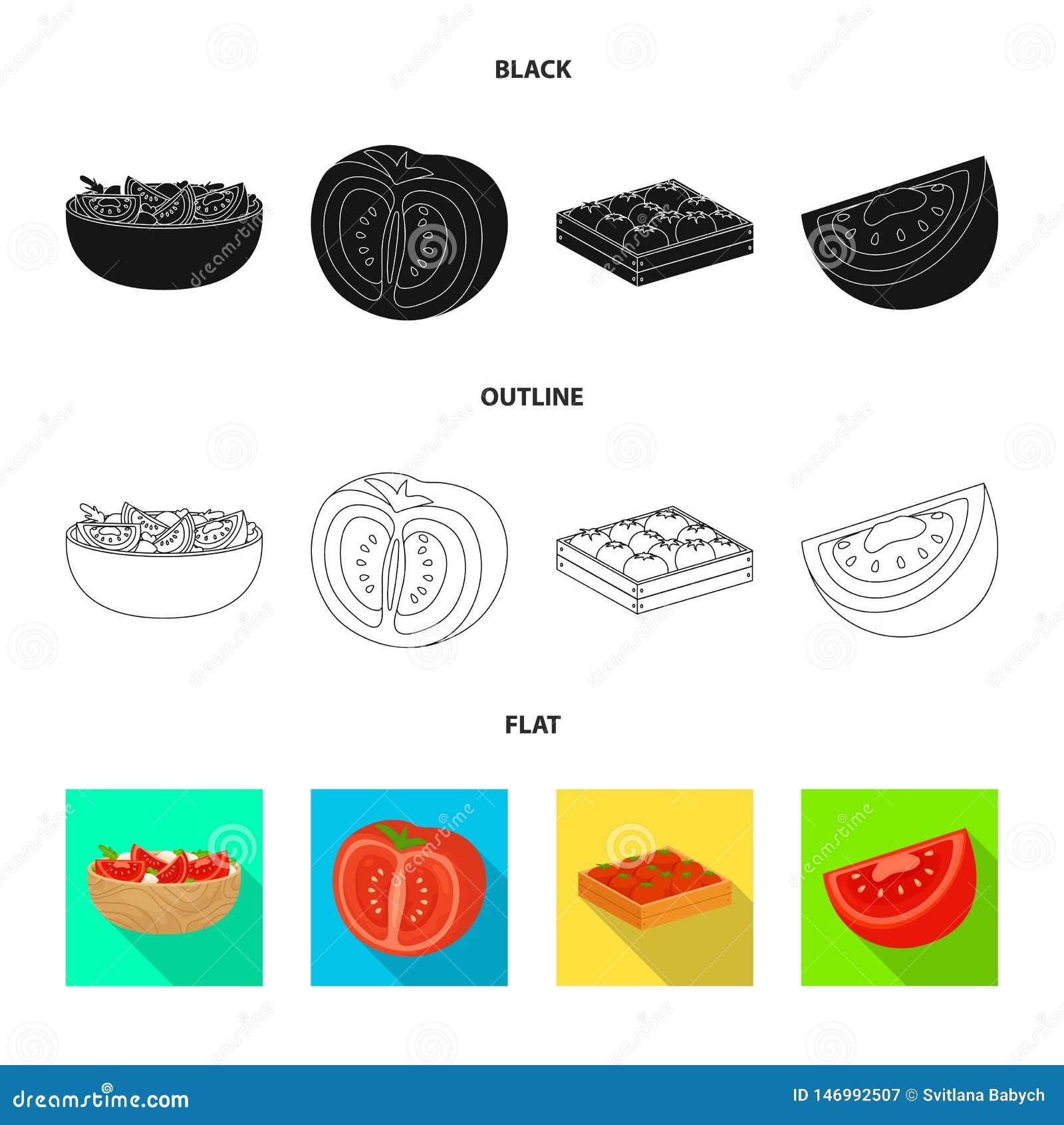 Ejemplo del vector de la muestra vegetal y deliciosa Colecci?n de ejemplo com?n vegetal y natural del vector