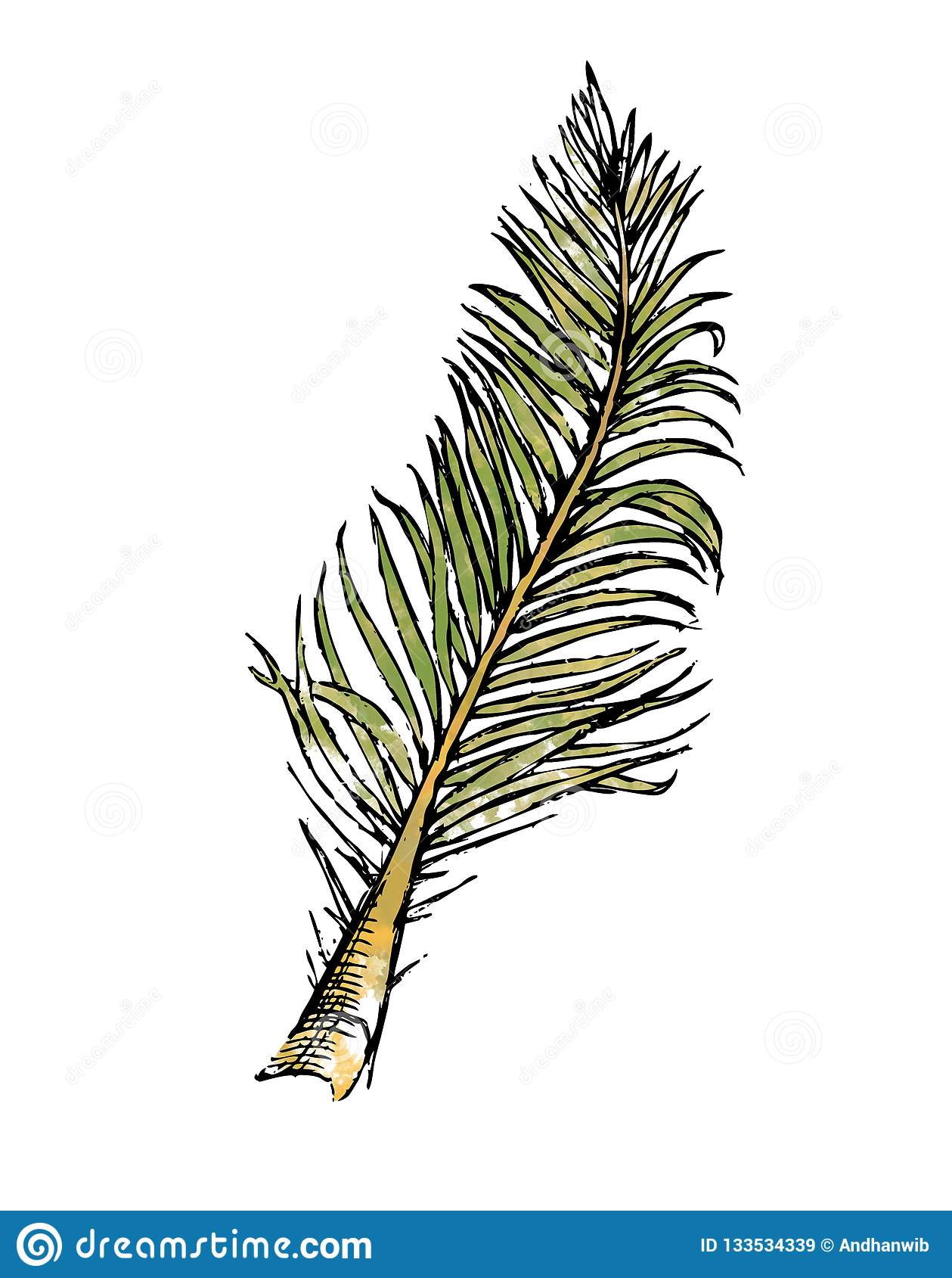 Ejemplo del Watercolour de la hoja pinada del coco