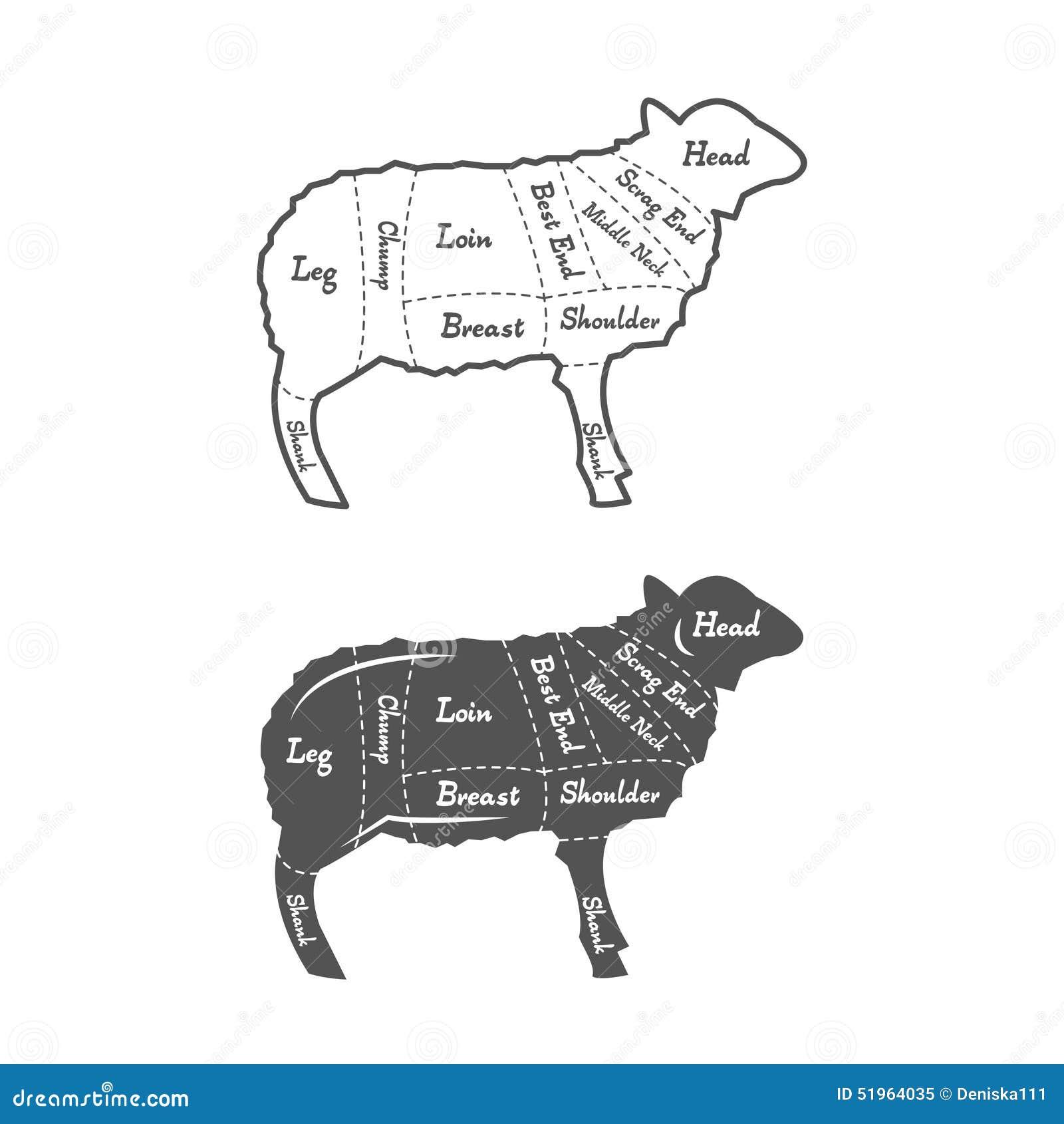 Ejemplo, Diagrama, Esquema O Carta Detallado De Ilustración del ...