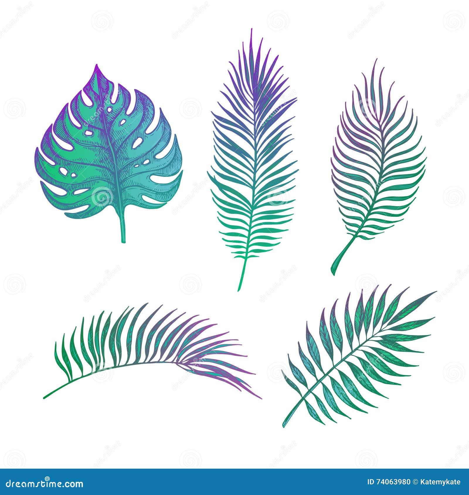 Ejemplo dibujado mano del vector - hojas de palma