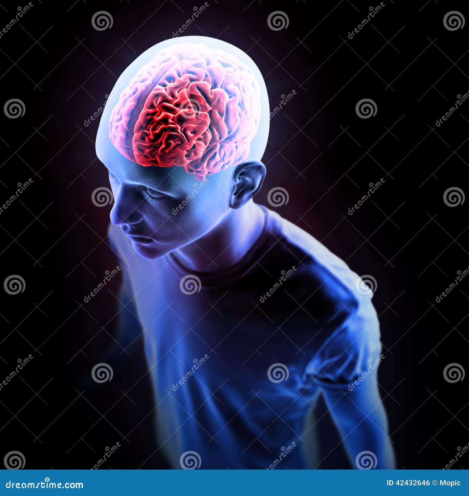 Ejemplo humano de la anatomía - cerebro
