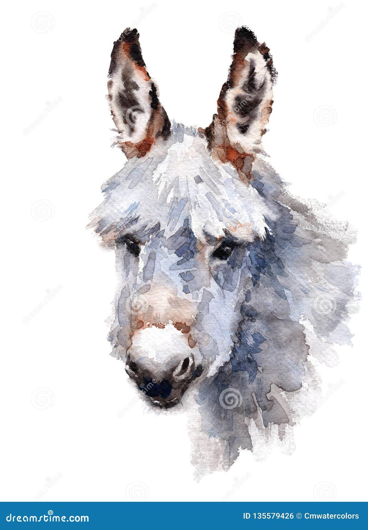 Ejemplo pintado a mano de la acuarela del burro lindo aislado en el fondo blanco