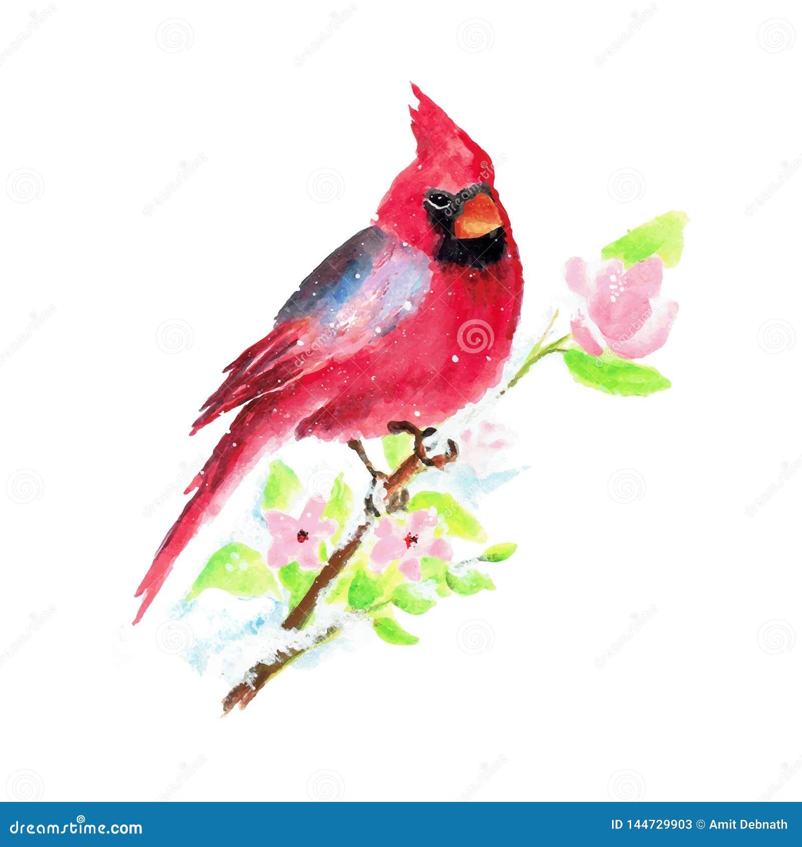 Ejemplo pintado a mano del vector del pájaro de la Navidad de la acuarela