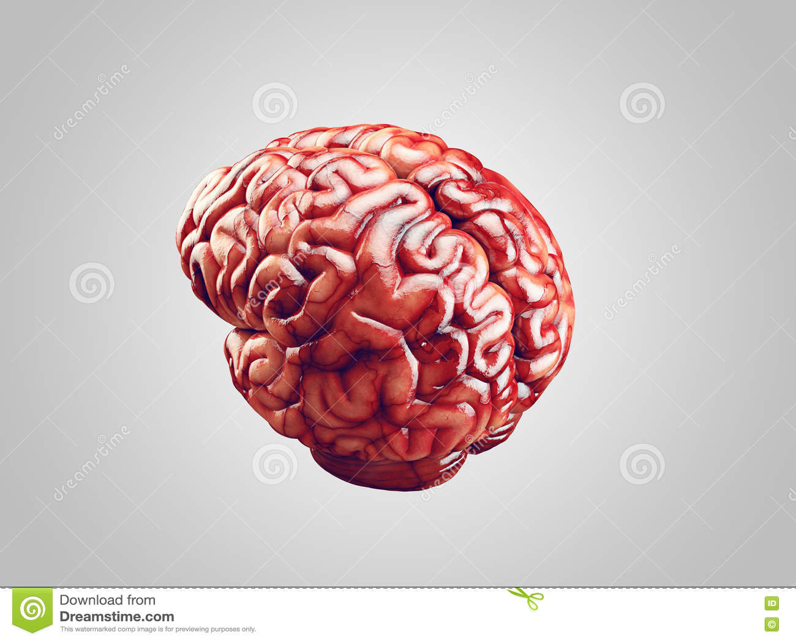 Ejemplo Realista Del Cerebro Stock de ilustración - Ilustración de ...