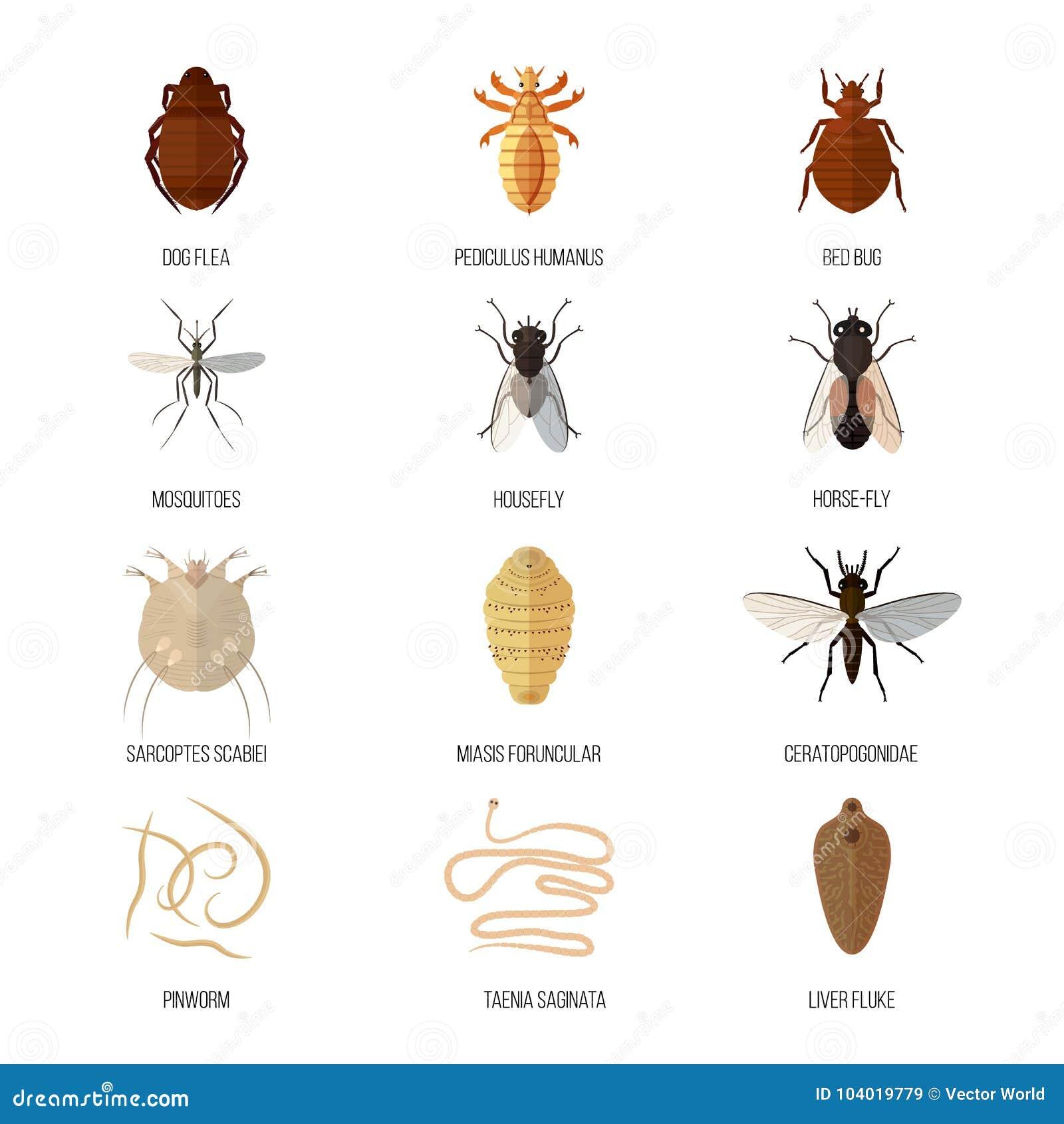 enfermedad en insectos
