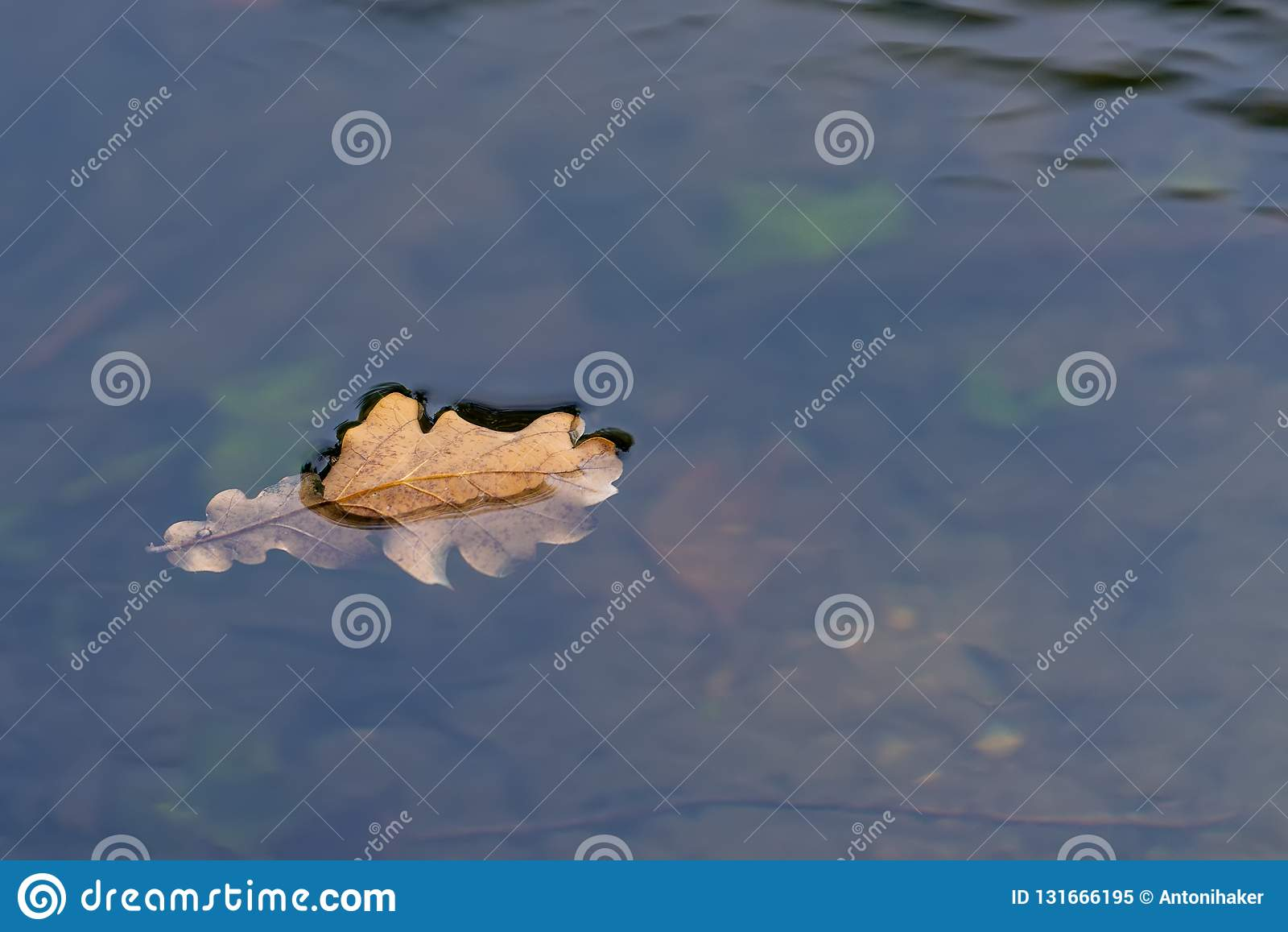 Ekblad som svävar ner floden