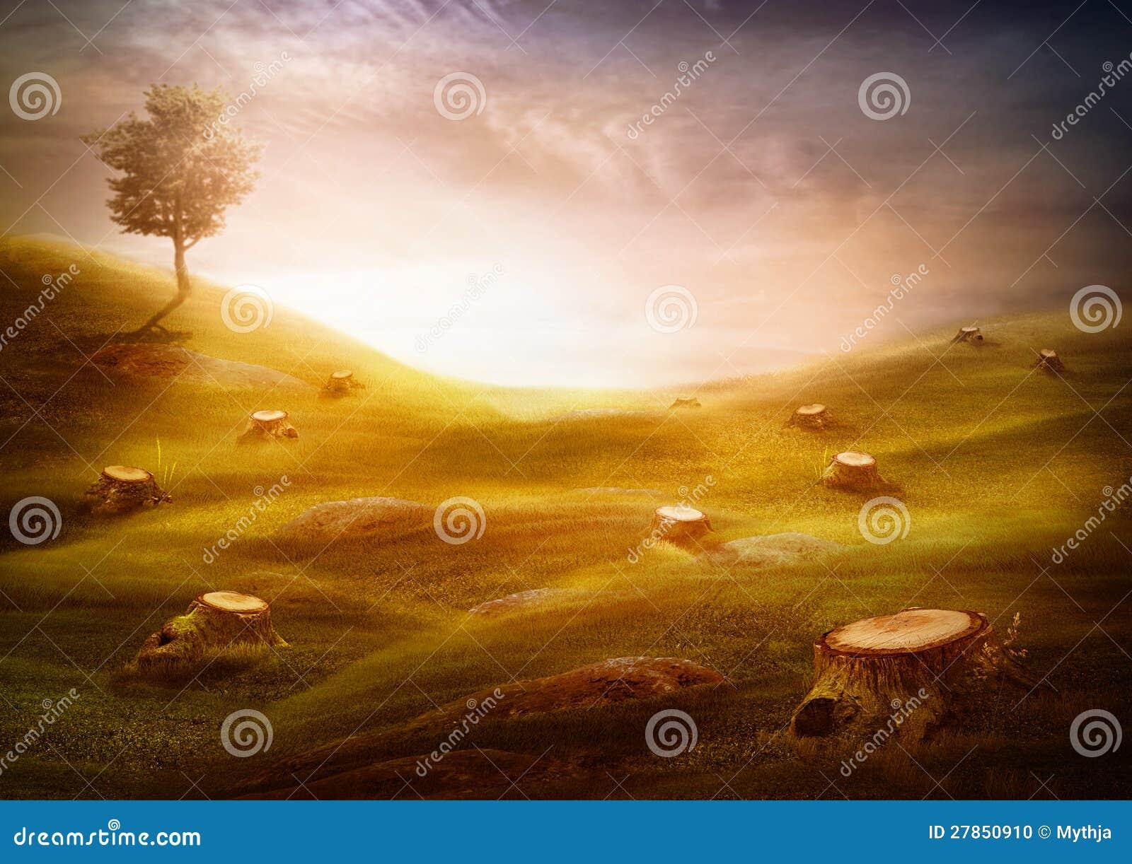 Ekologia & środowiska projekt - Lasowy zniszczenie