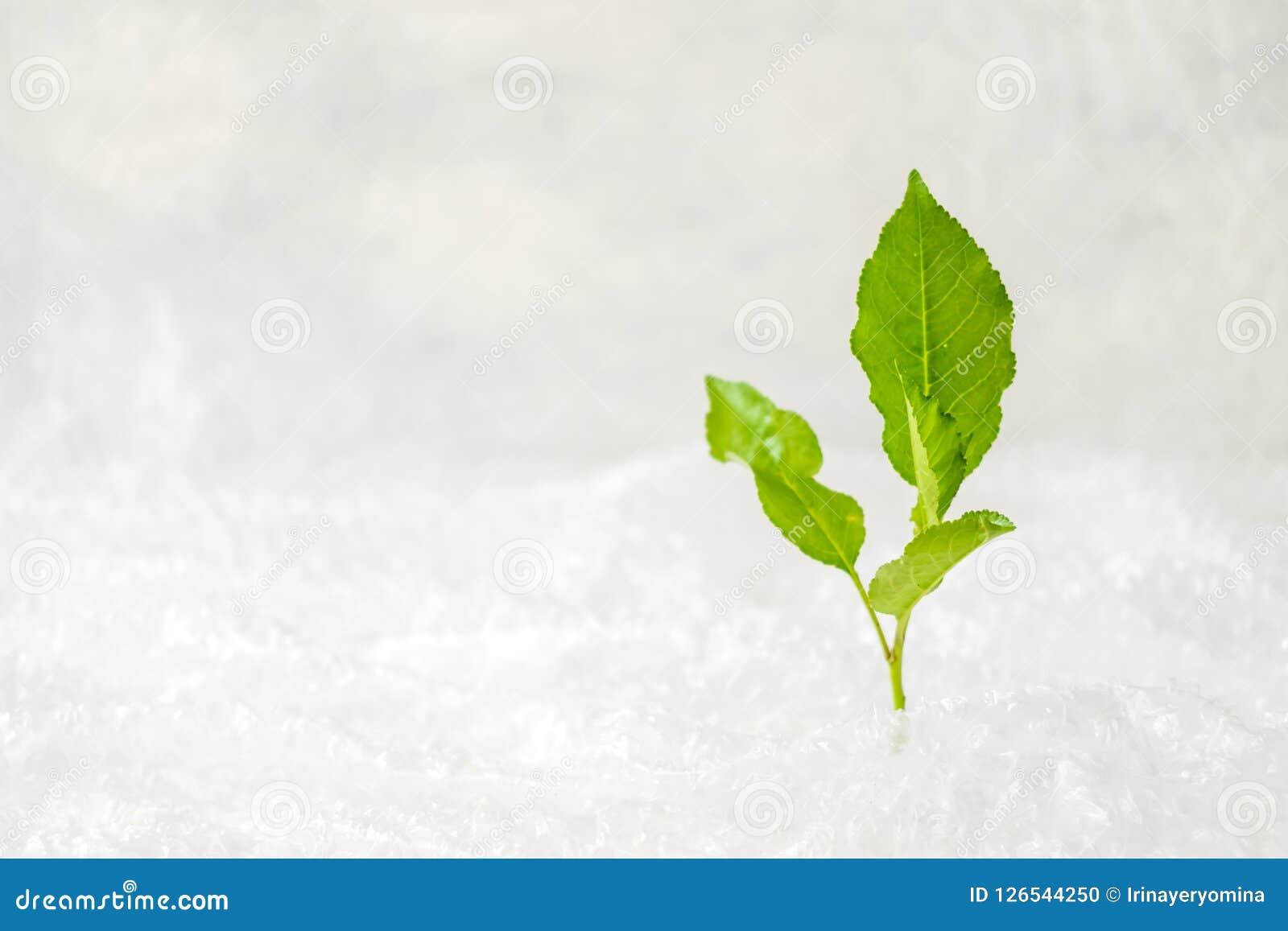 Ekologia, środowiska zanieczyszczenia pojęcie Zielona roślina w bąbla wr