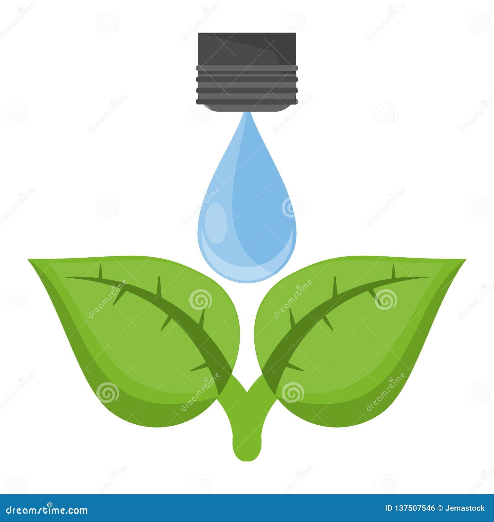 Ekologii wody kropla na roślinie