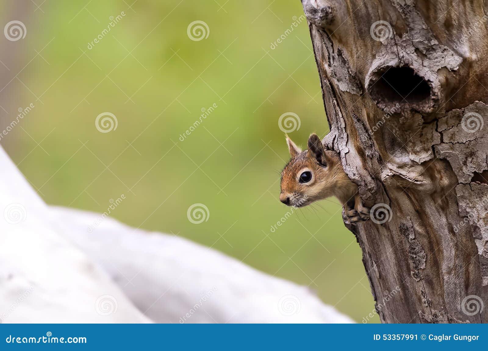 Ekorre på en trädfördjupning