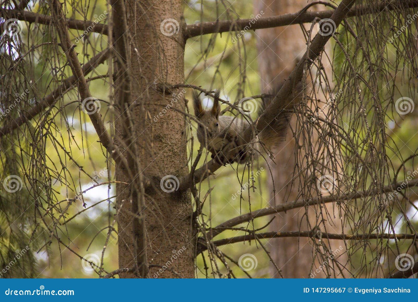 Ekorren äter mat på ho