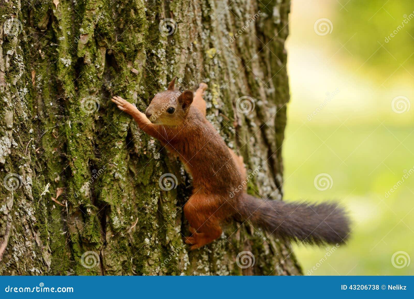 Download Ekorresammanträde På Ett Träd Arkivfoto - Bild av skog, äta: 43206738