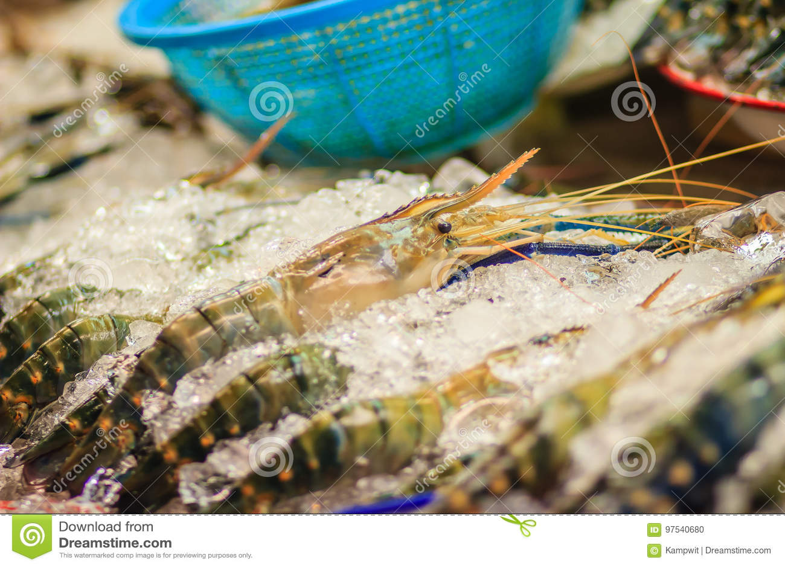 314d830b33007 Ekstra ampuły rozmiar gigantyczna malezyjska krewetka także znać jako  gigantyczna rzeczna krewetka lub gigantyczna słodkowodna krewetka, jest  handlowo ...