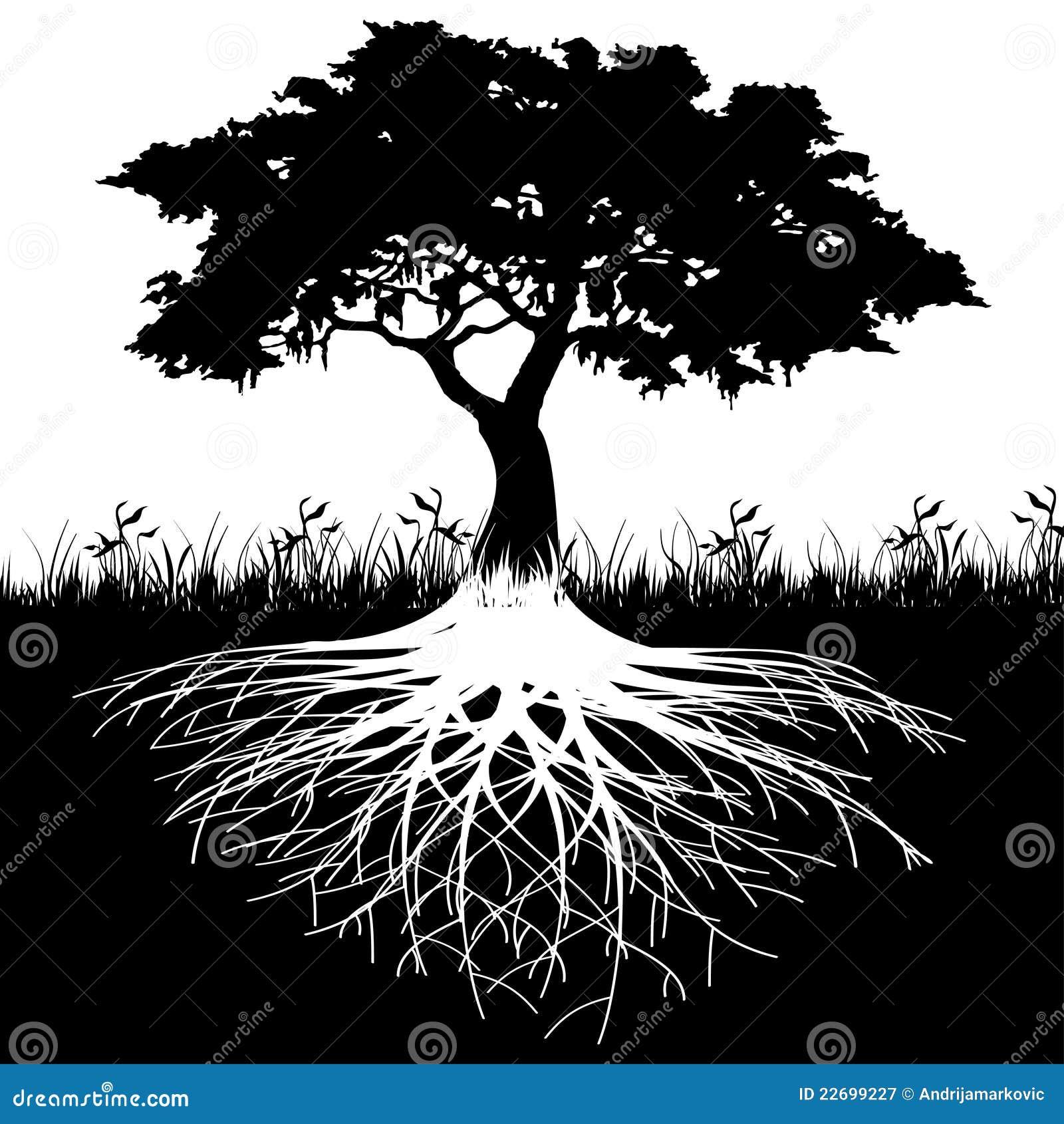 El árbol arraiga la silueta
