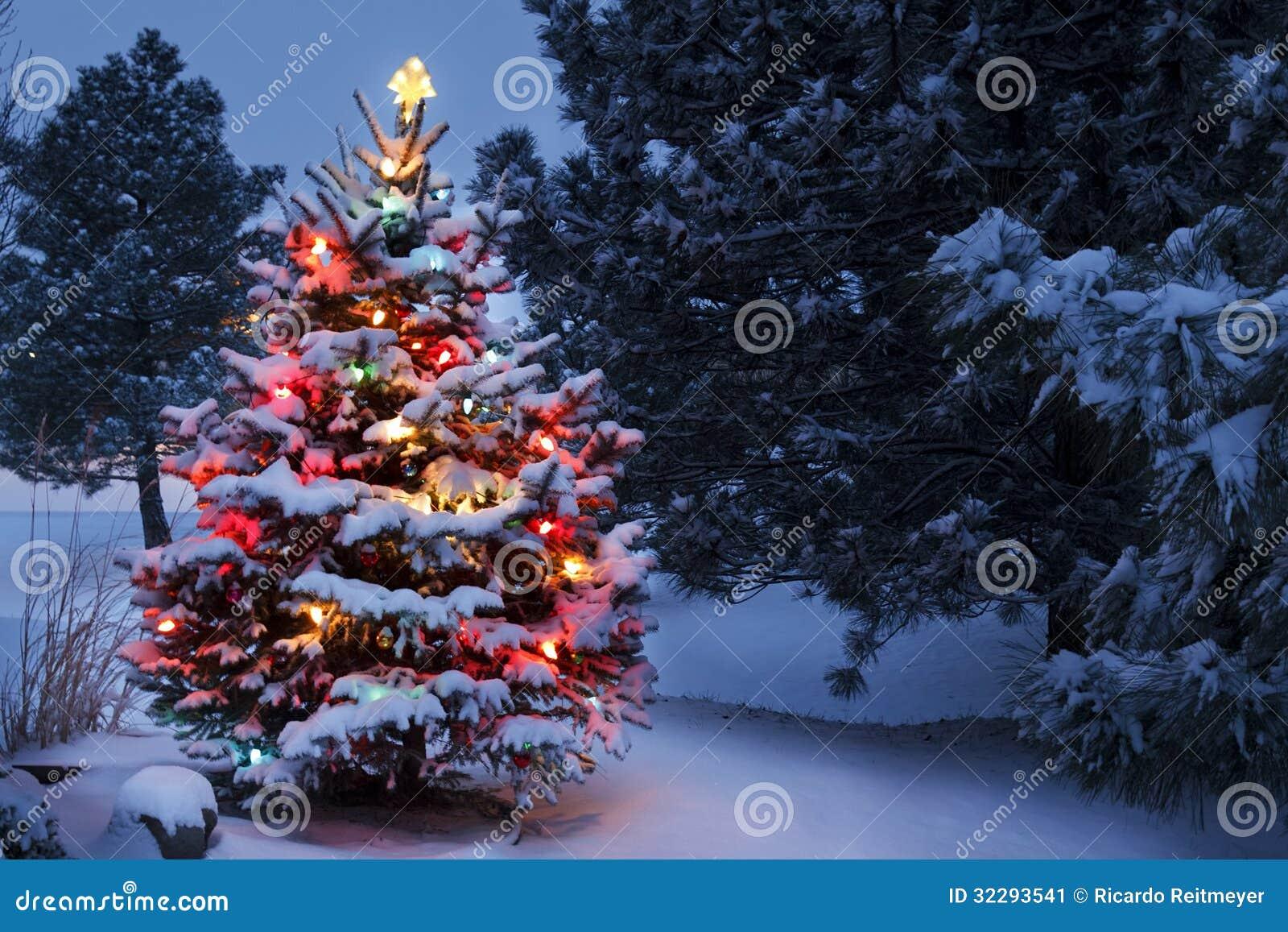 El árbol de navidad nevado brilla intensamente brillantemente en la luz de la madrugada