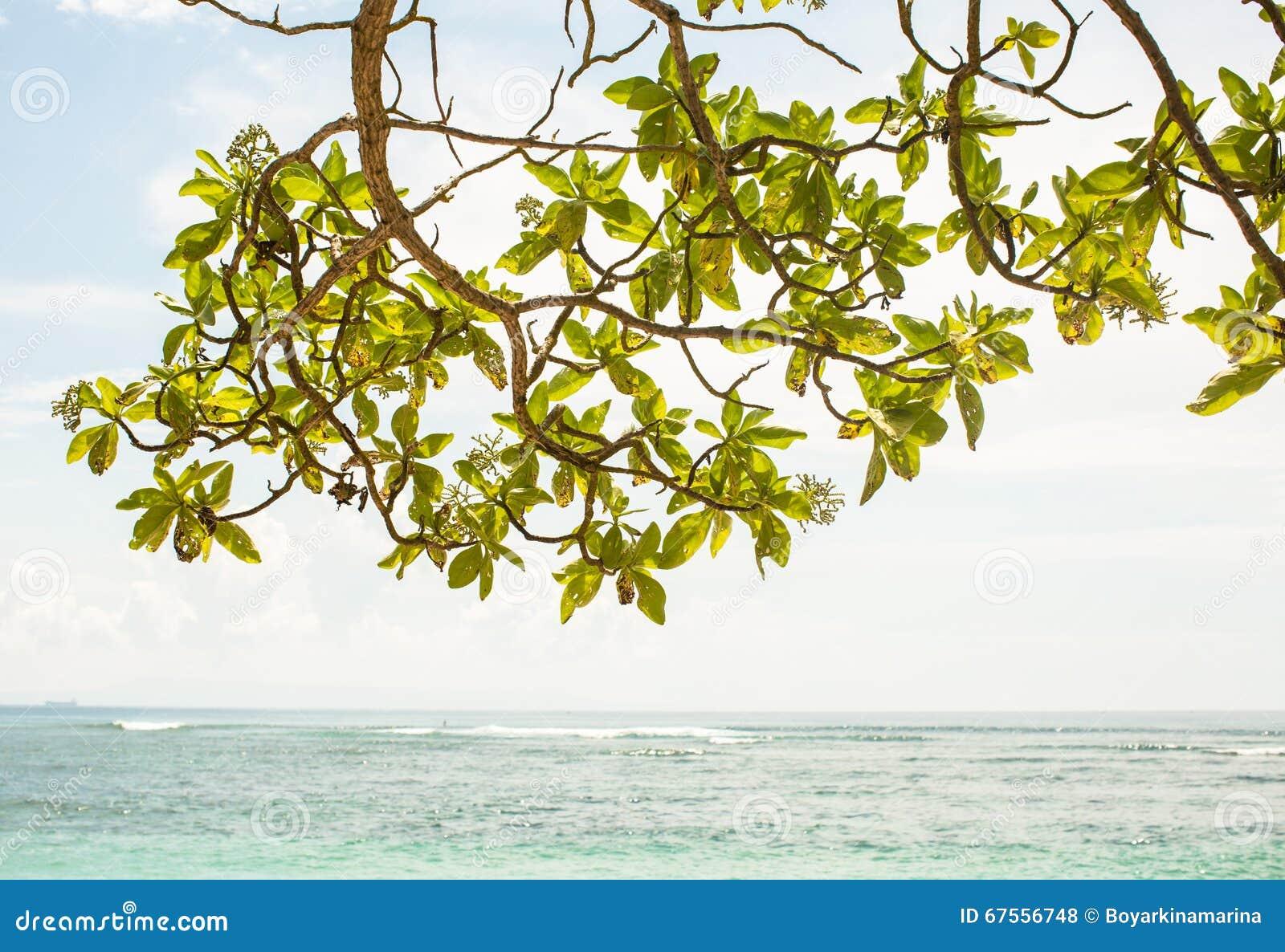 El árbol deja ramas con la opinión de la capa del océano en el fondo