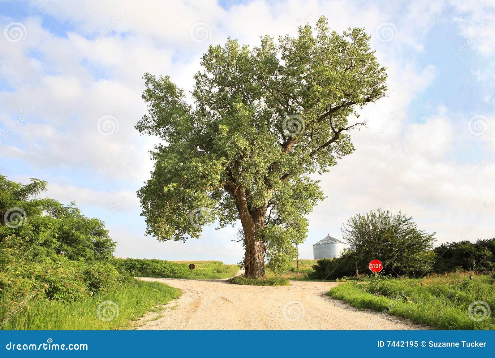 El árbol En El Medio Del Camino Imagen De Archivo Imagen De Condado Camino 7442195
