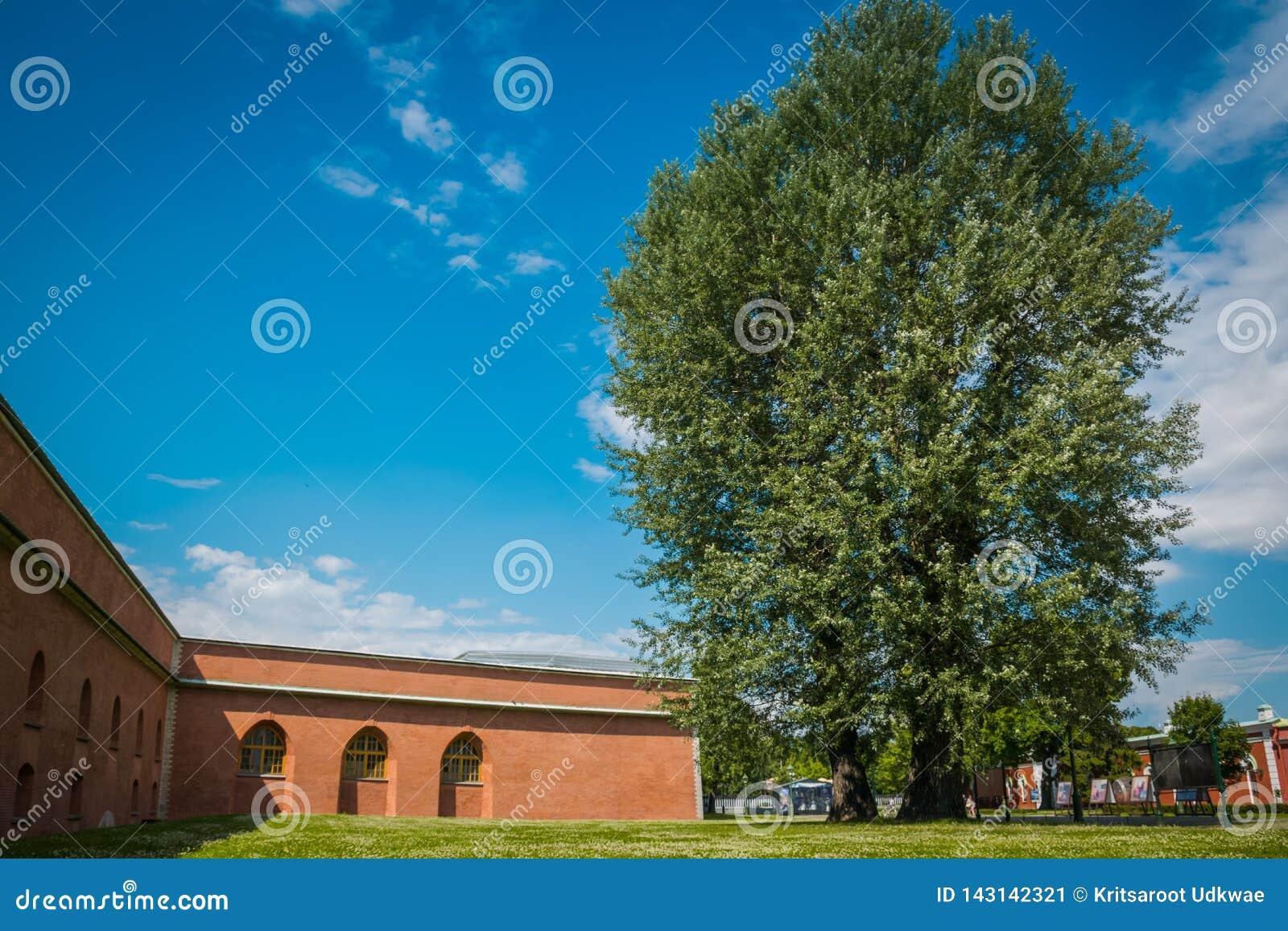 El árbol grande delante de la puerta de Peter y de Paul Cathedral