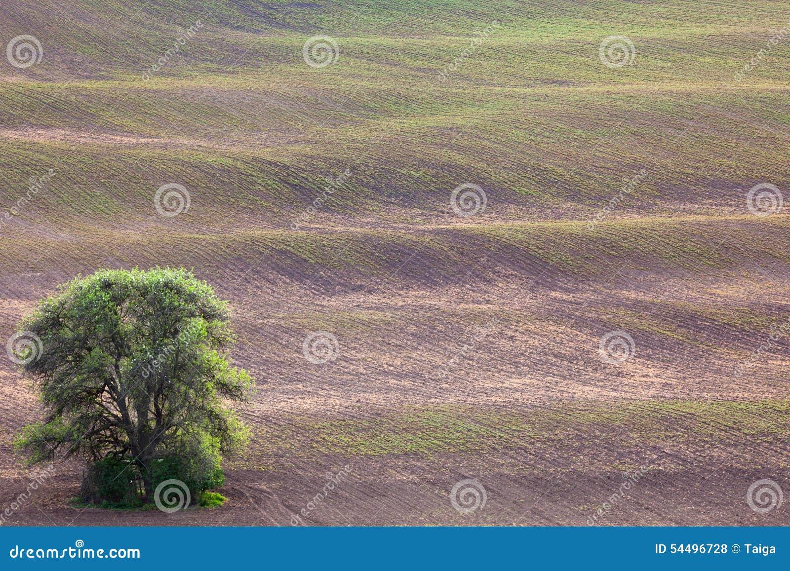 El árbol Viejo Y Las Ondas De Tierra Resumen Paisaje Del Minimalismo ...