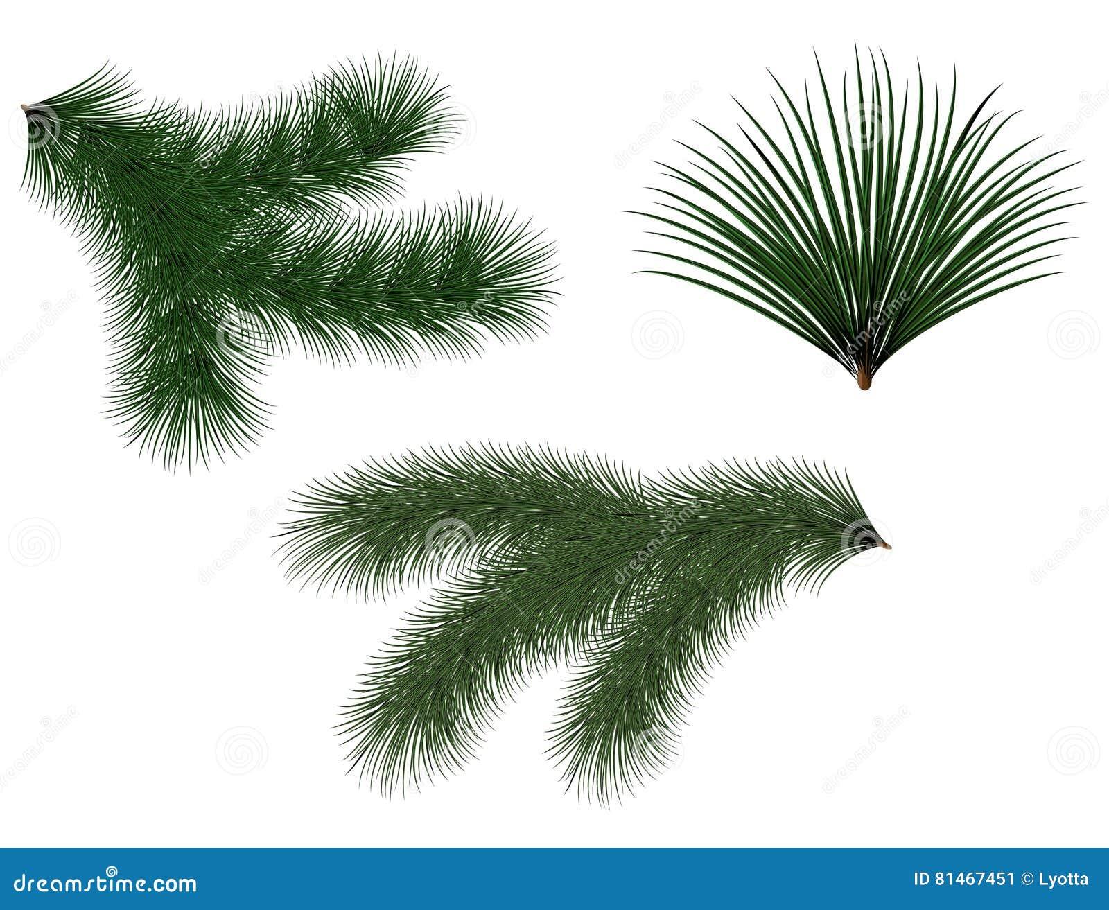 El abeto de los árboles de navidad y de las guirnaldas del verde del Año Nuevo ramifica con las agujas largas