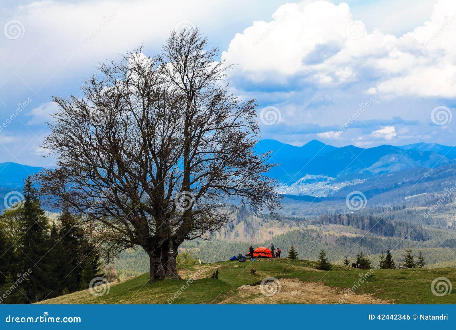 El acampar en tienda roja debajo de un árbol encima de una montaña Hermoso