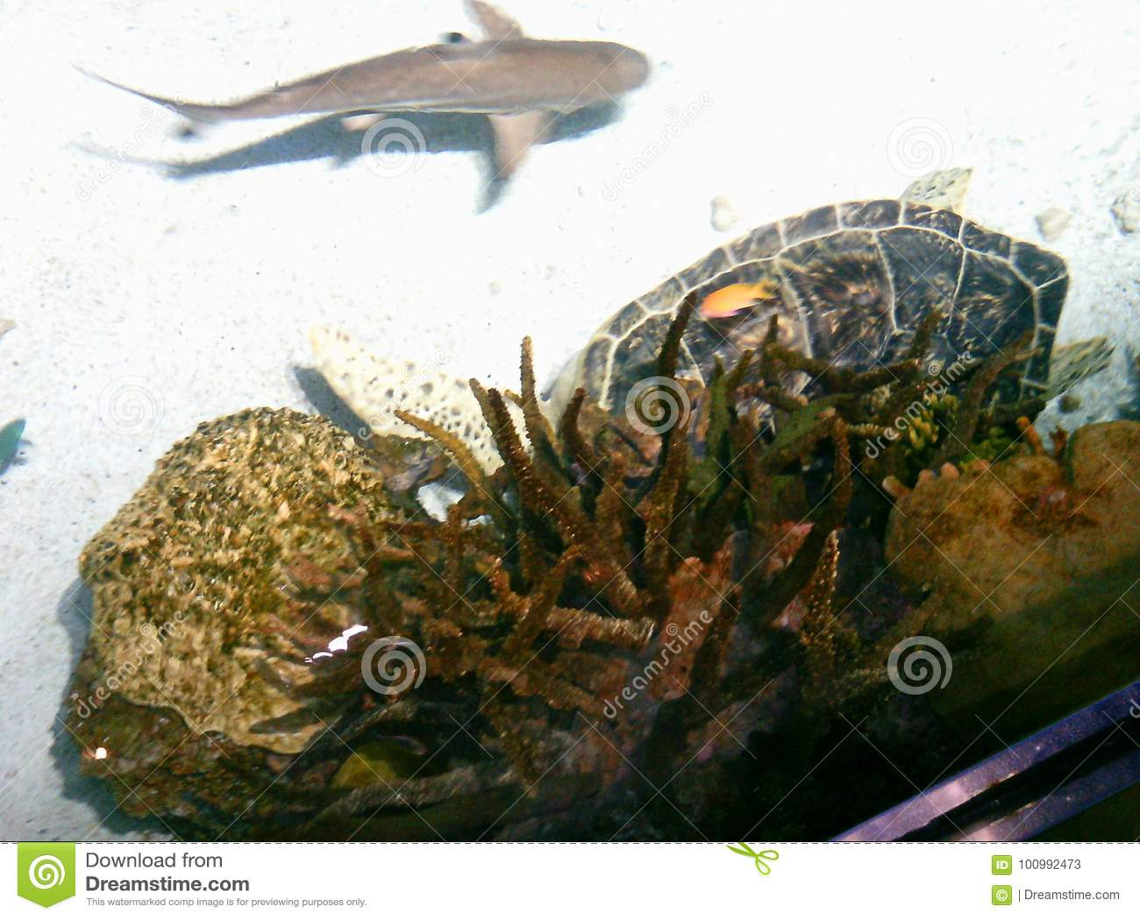 El acuario nacional