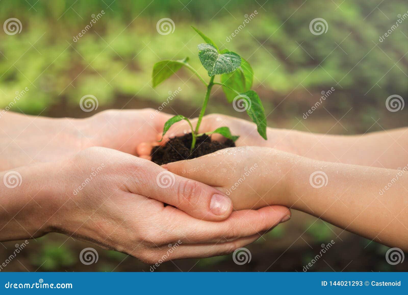 El adulto y el niño se están sosteniendo en almácigo de las manos