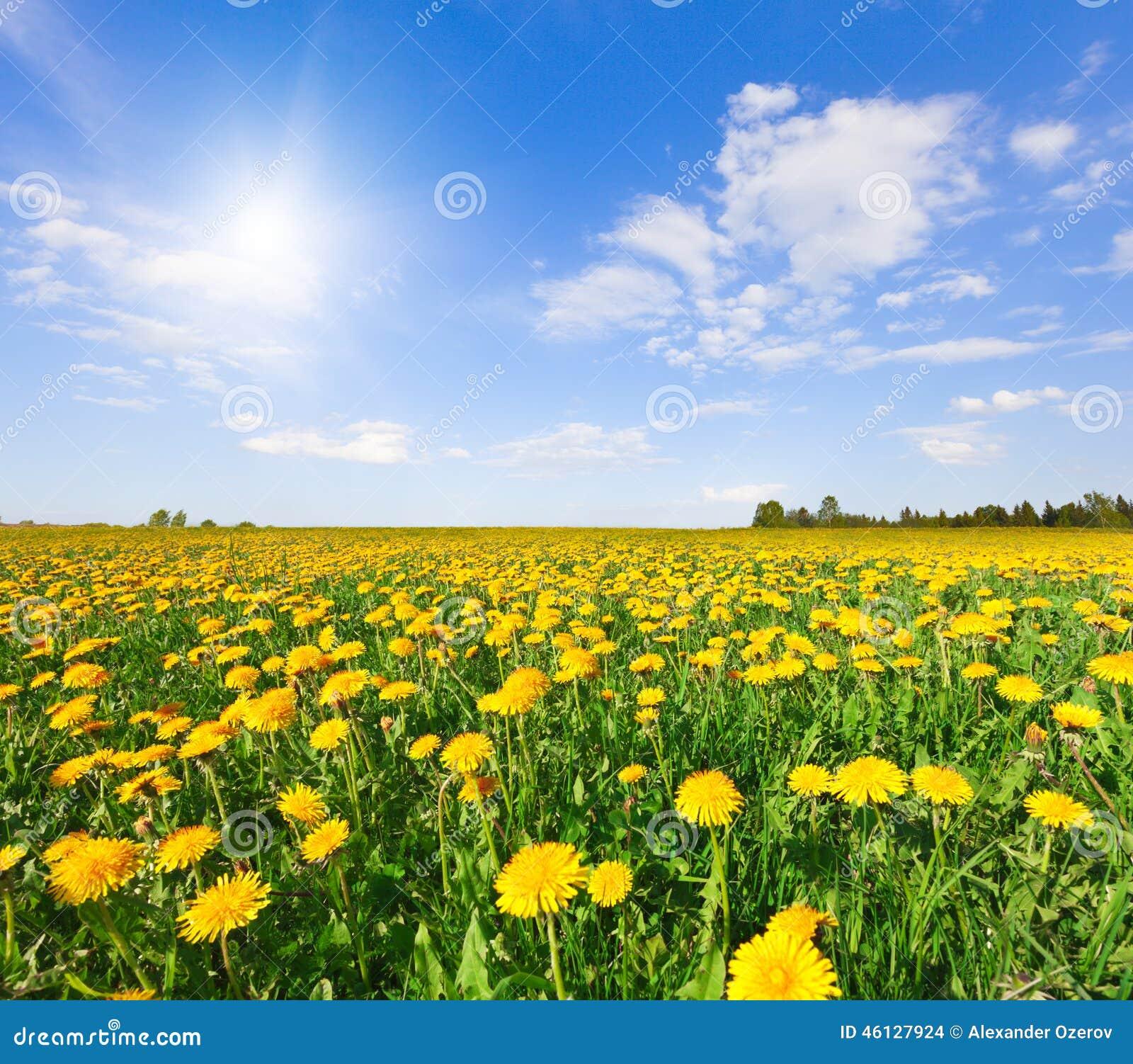 El amarillo florece la colina bajo el cielo nublado azul