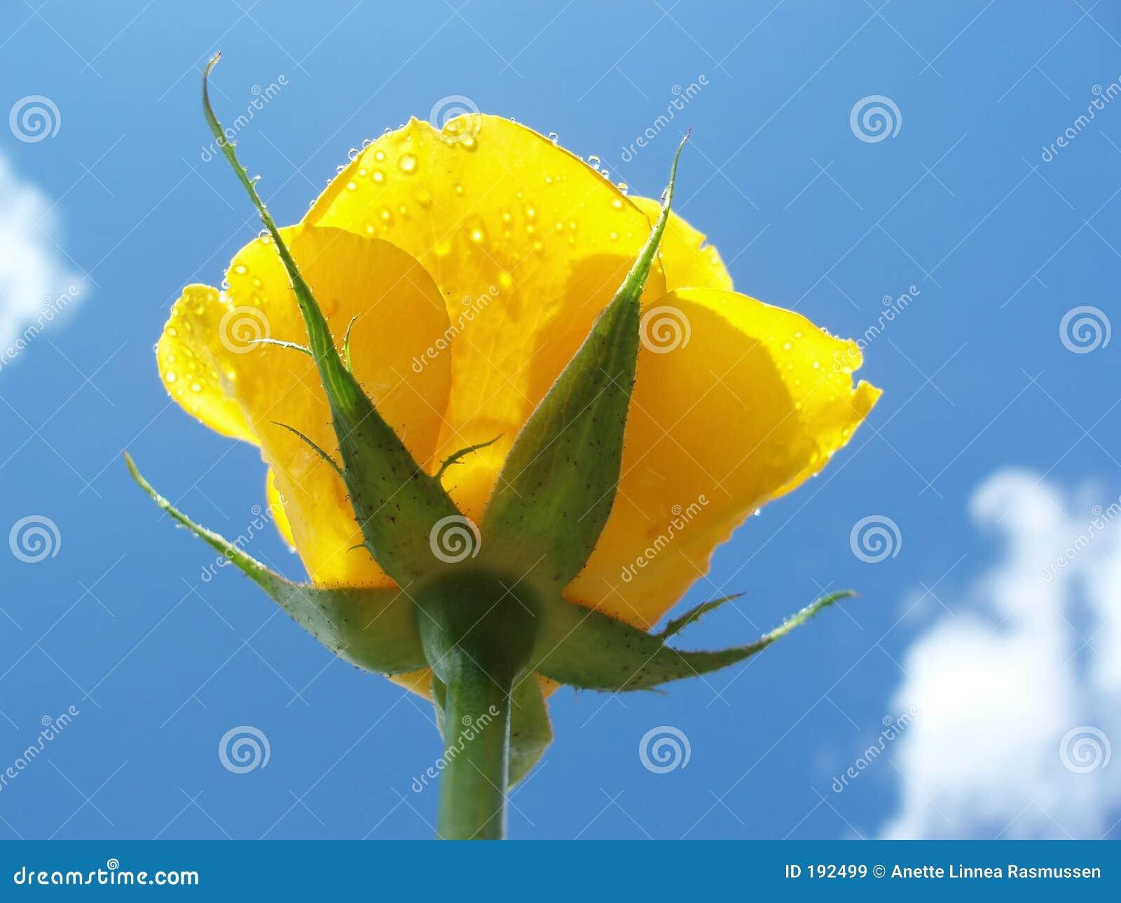 El amarillo se levantó contra el cielo azul con las nubes