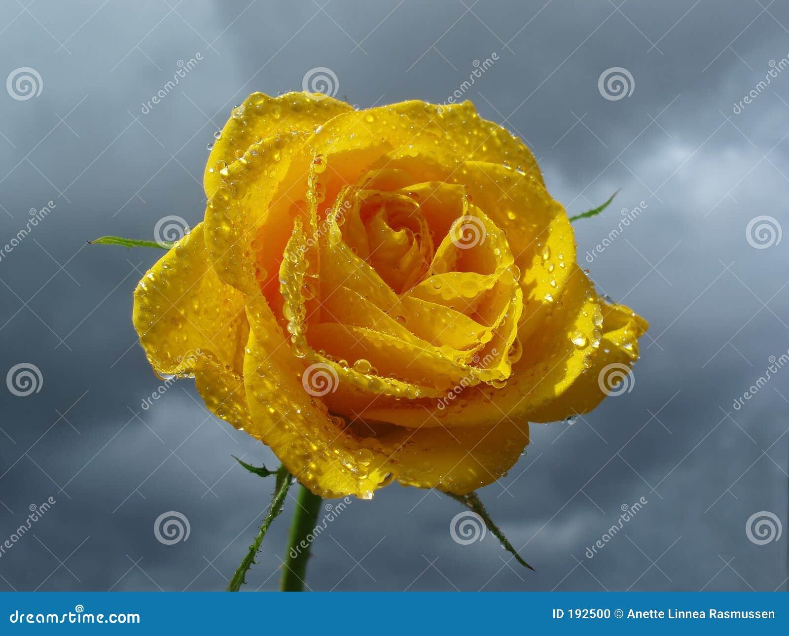 El amarillo se levantó contra el cielo con las nubes