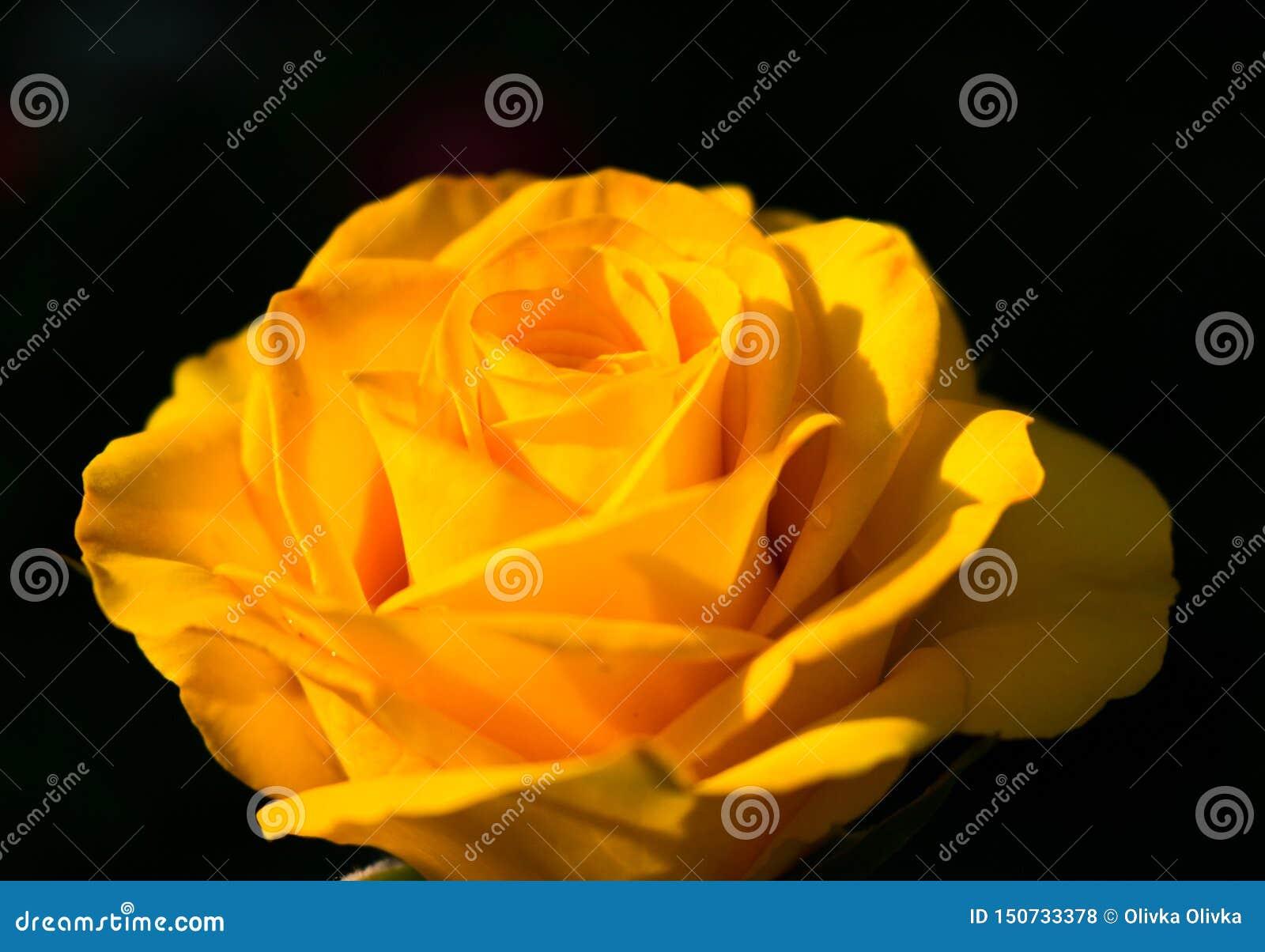 El amarillo se levant? en un fondo negro Copie el espacio